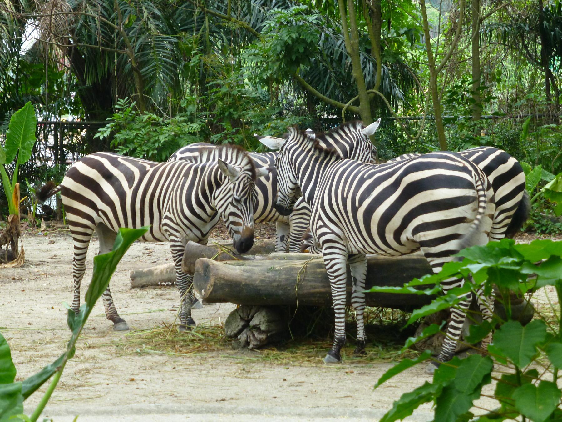 A Zebra Brunch