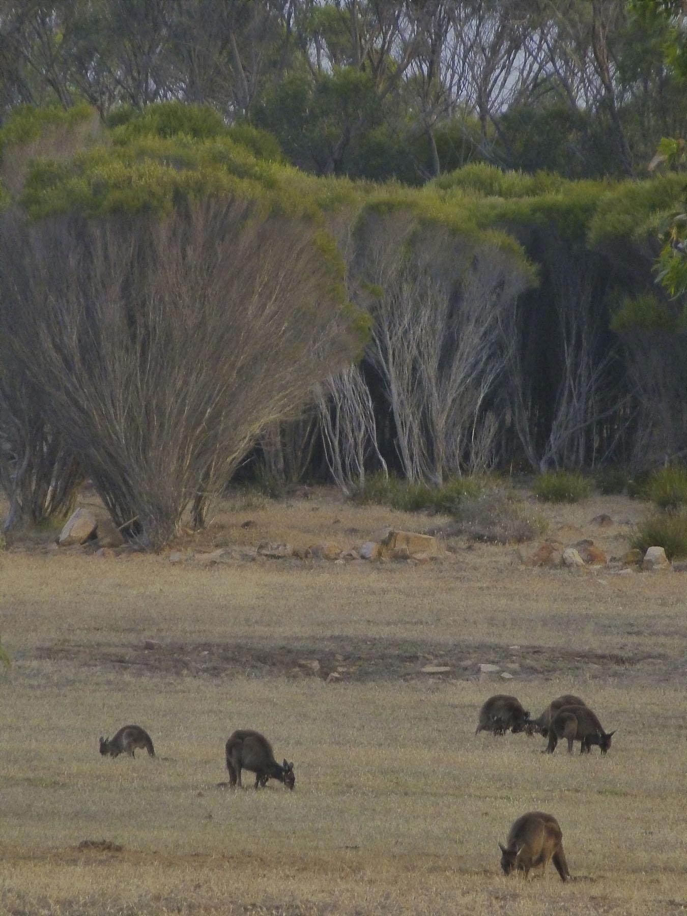 An Australian View