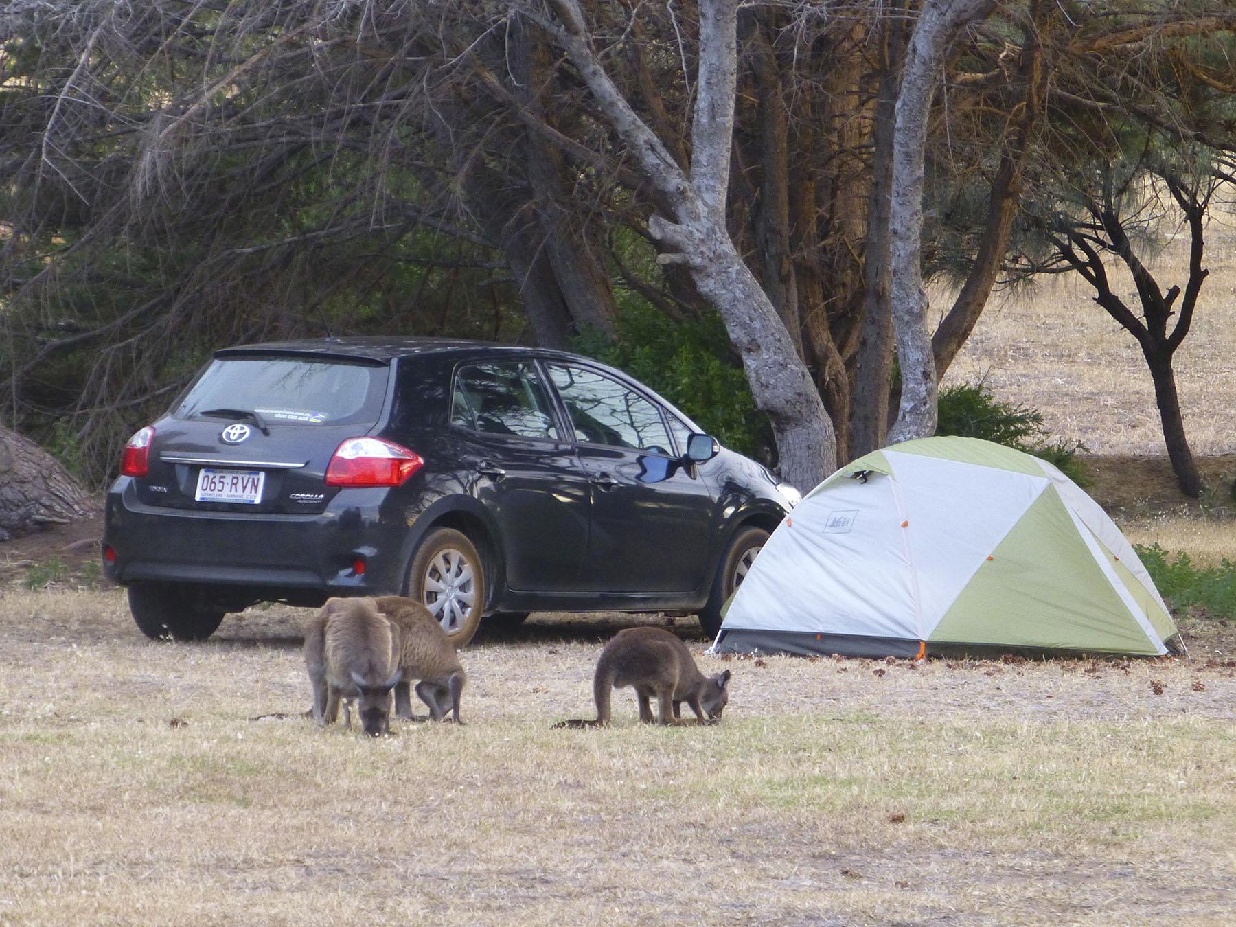 Campsite Visitors