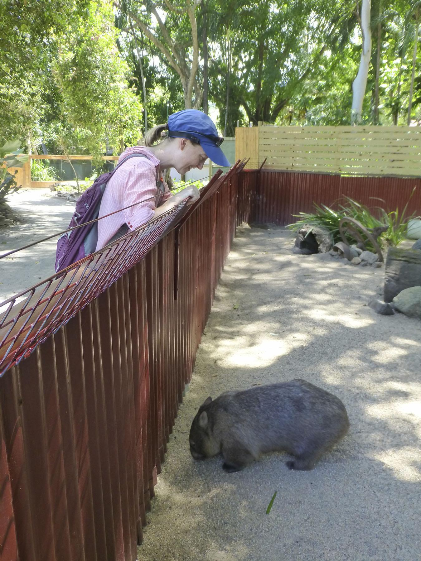 Wombat Greeting