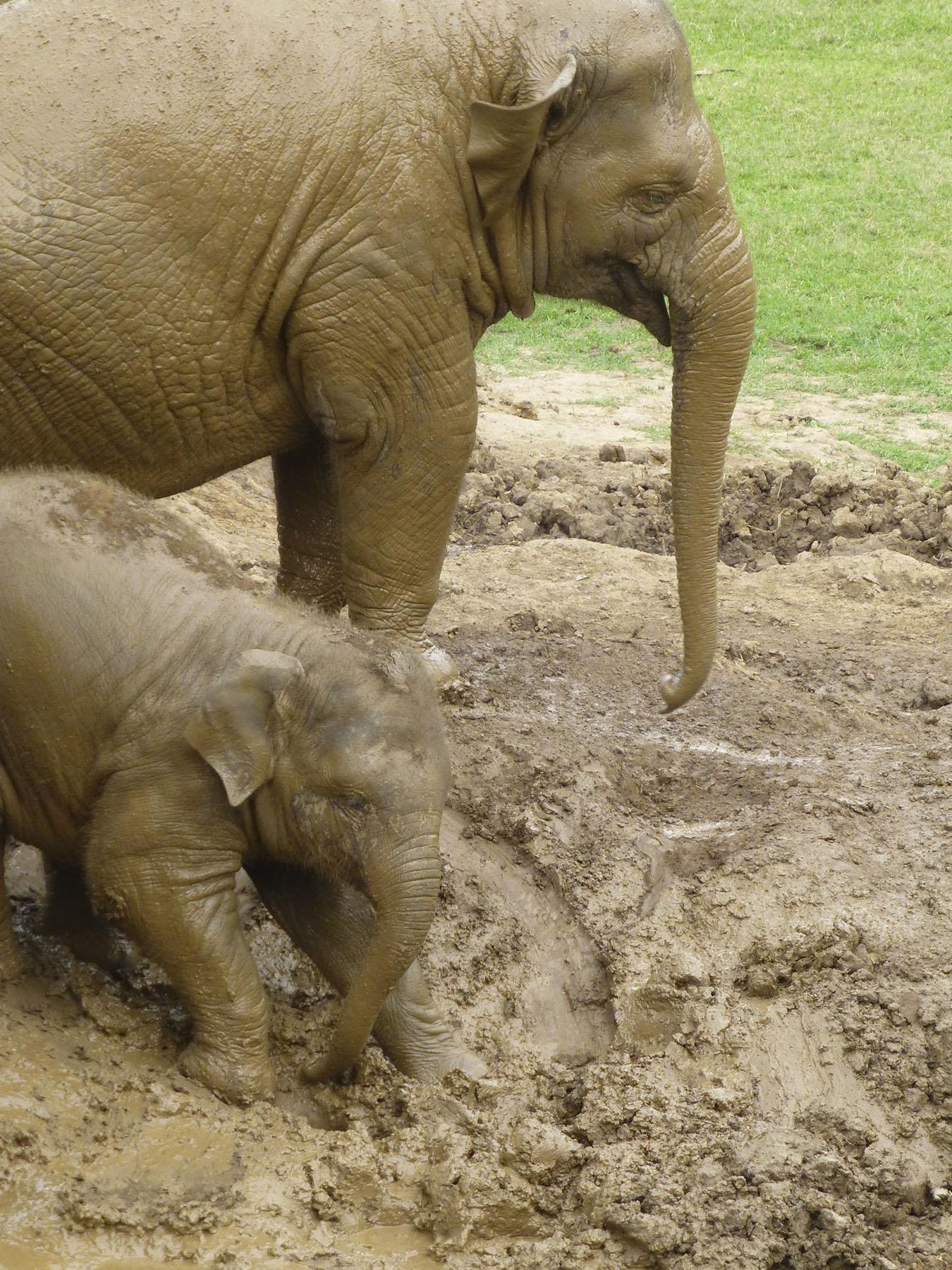 Mud Sliding