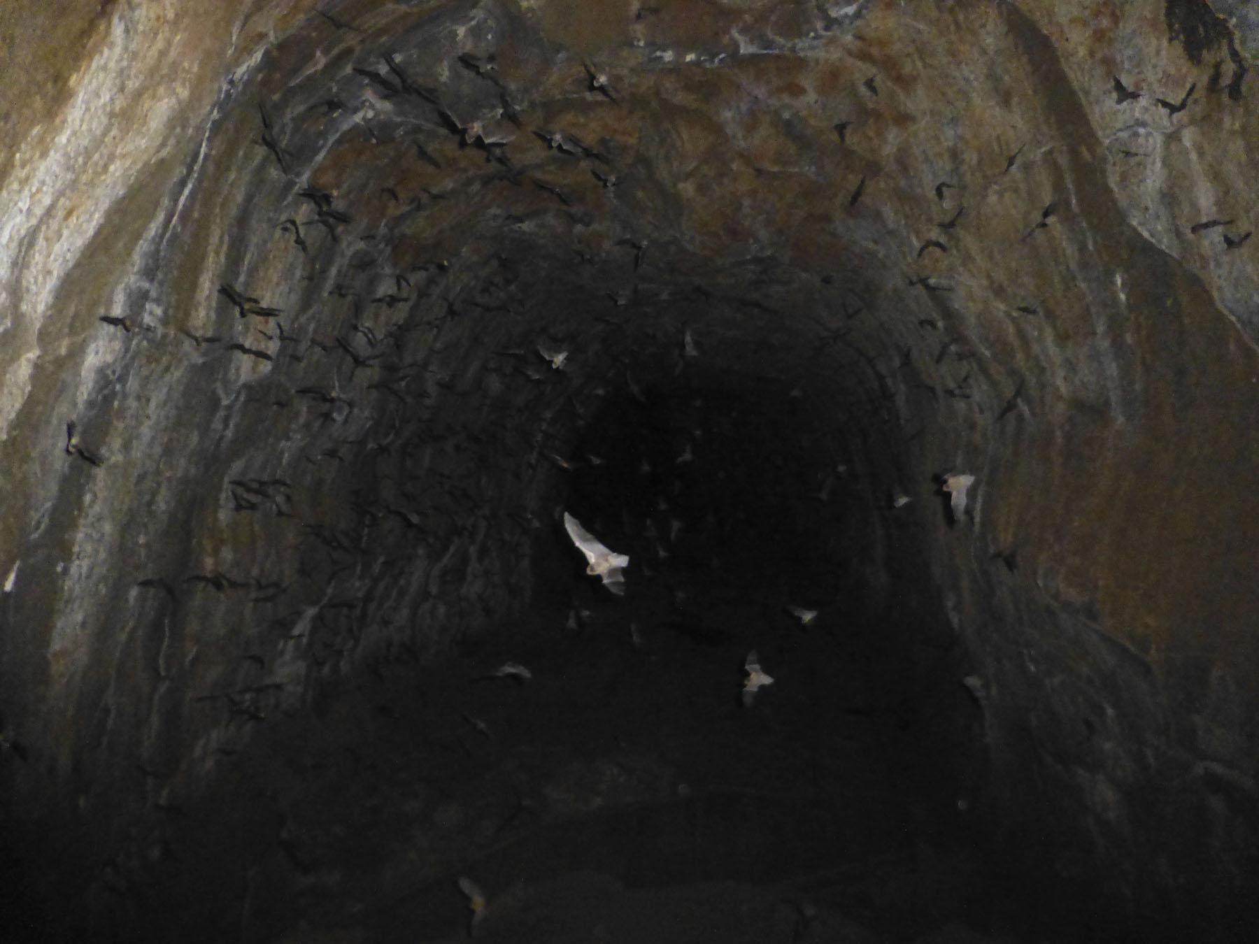 Bat Cave!
