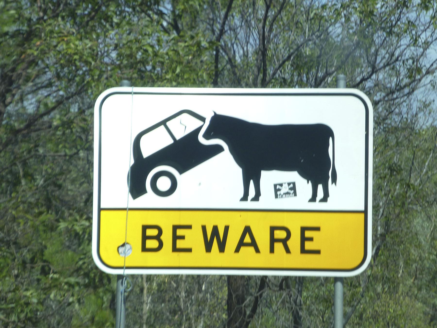 Beware Cows