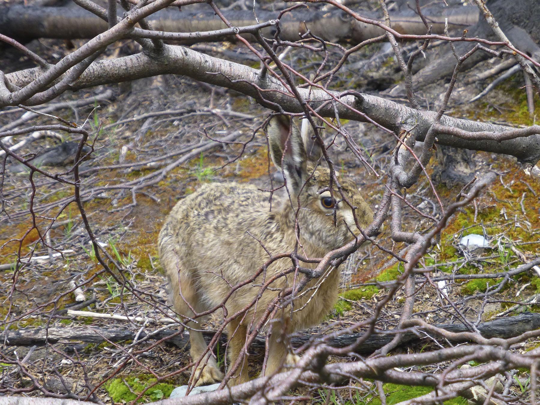 Giant Rabbit!