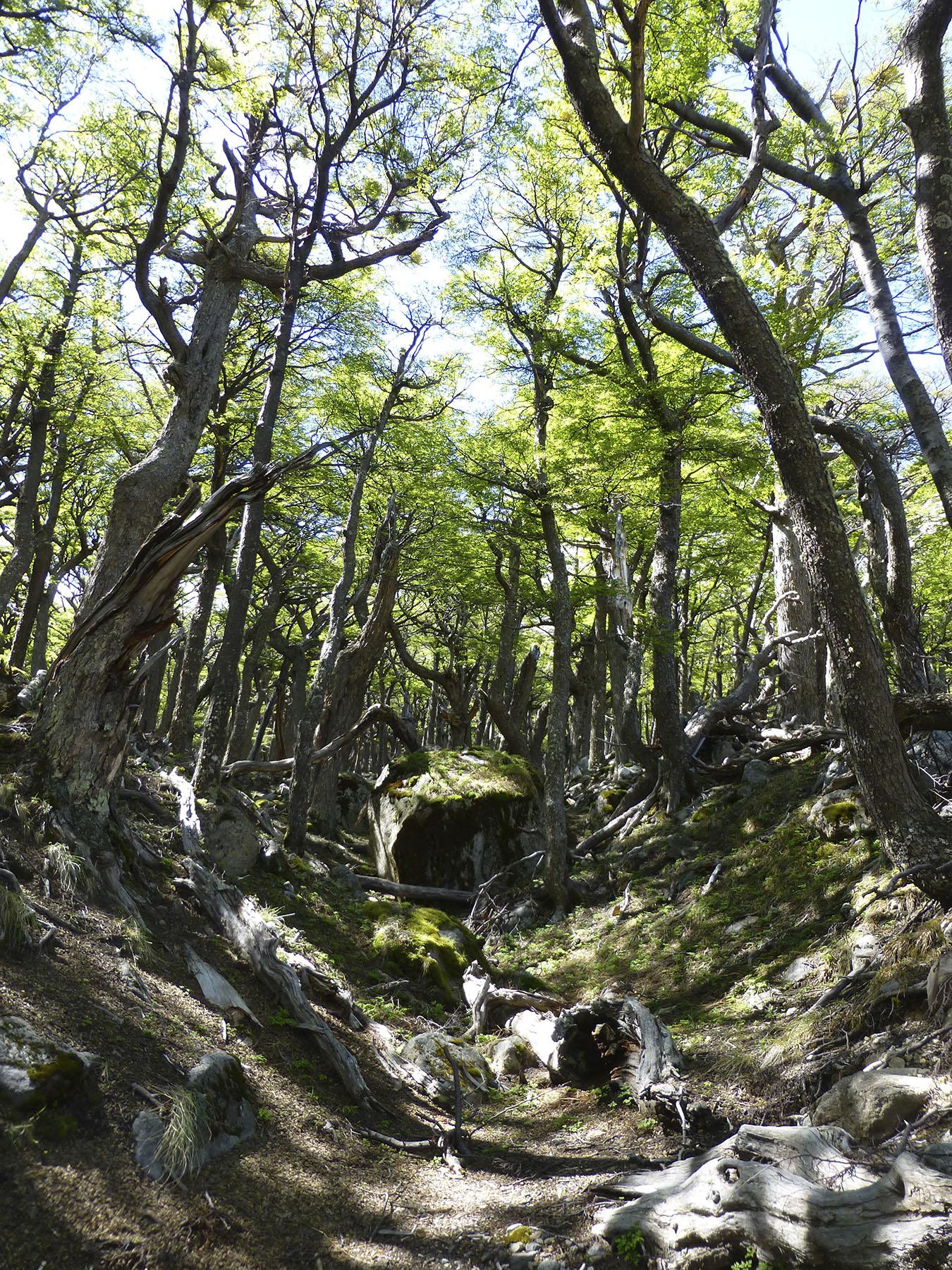 Undulating Forest Floor