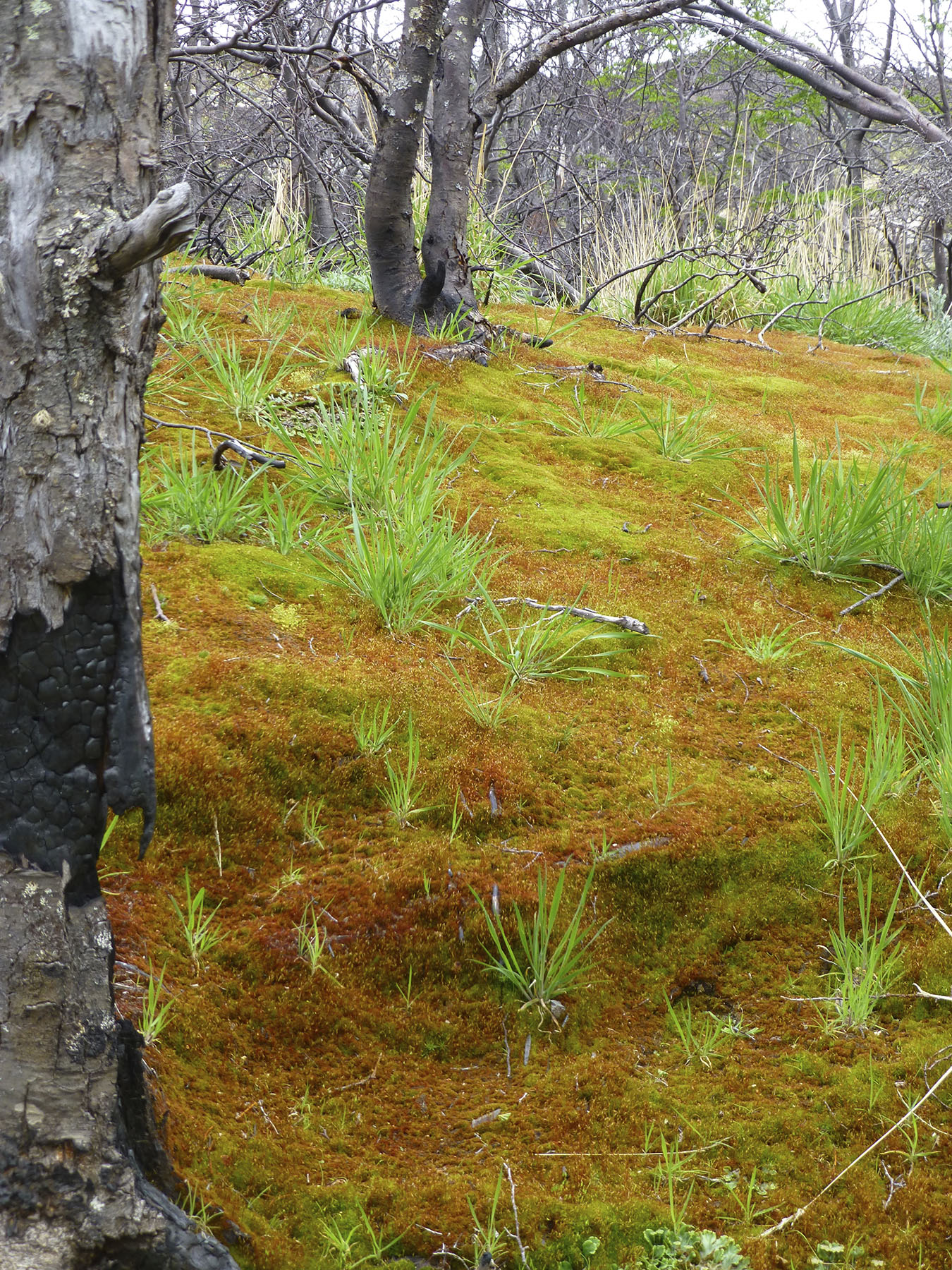 Vibrant Moss