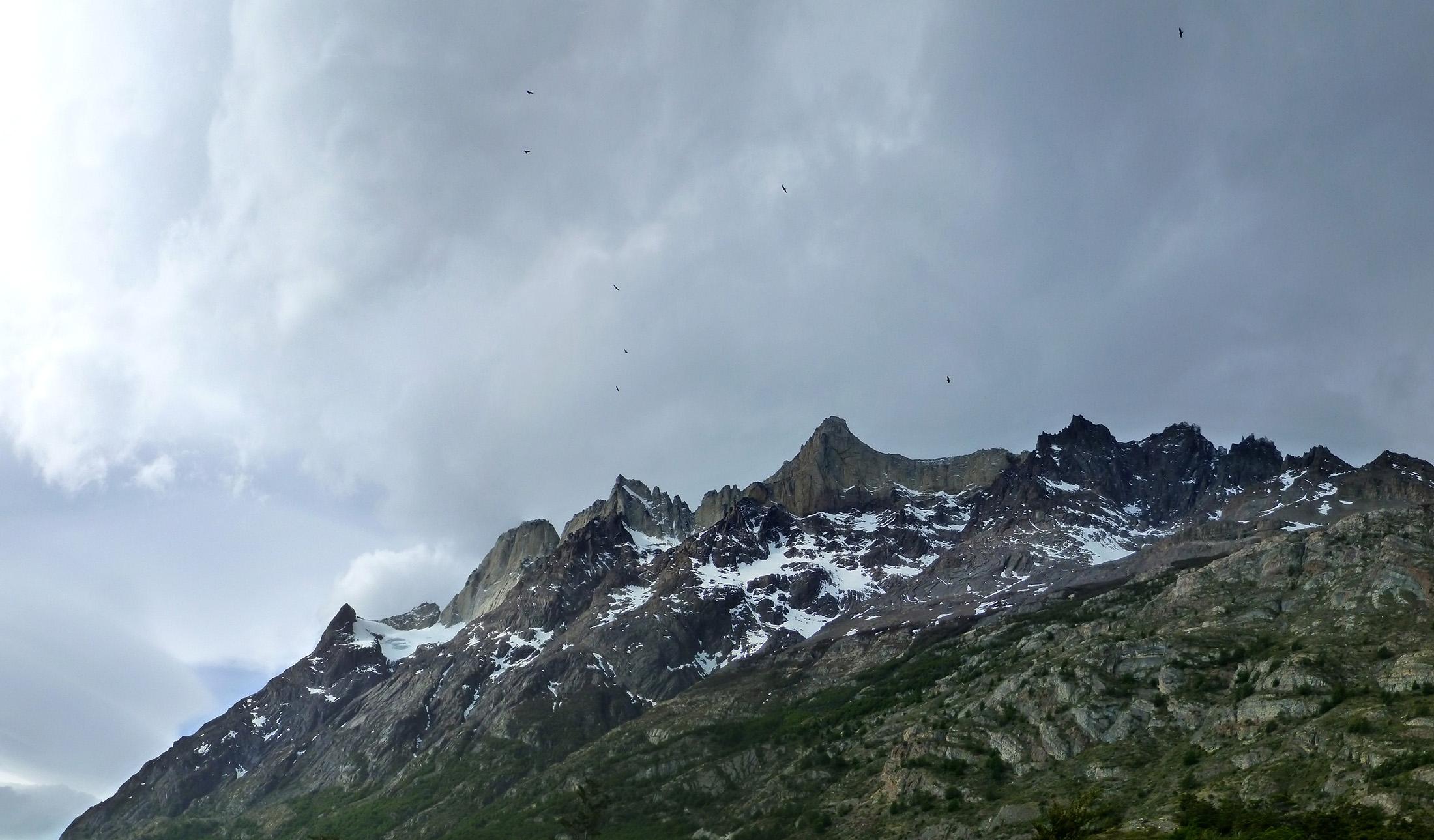 Flock of Condors