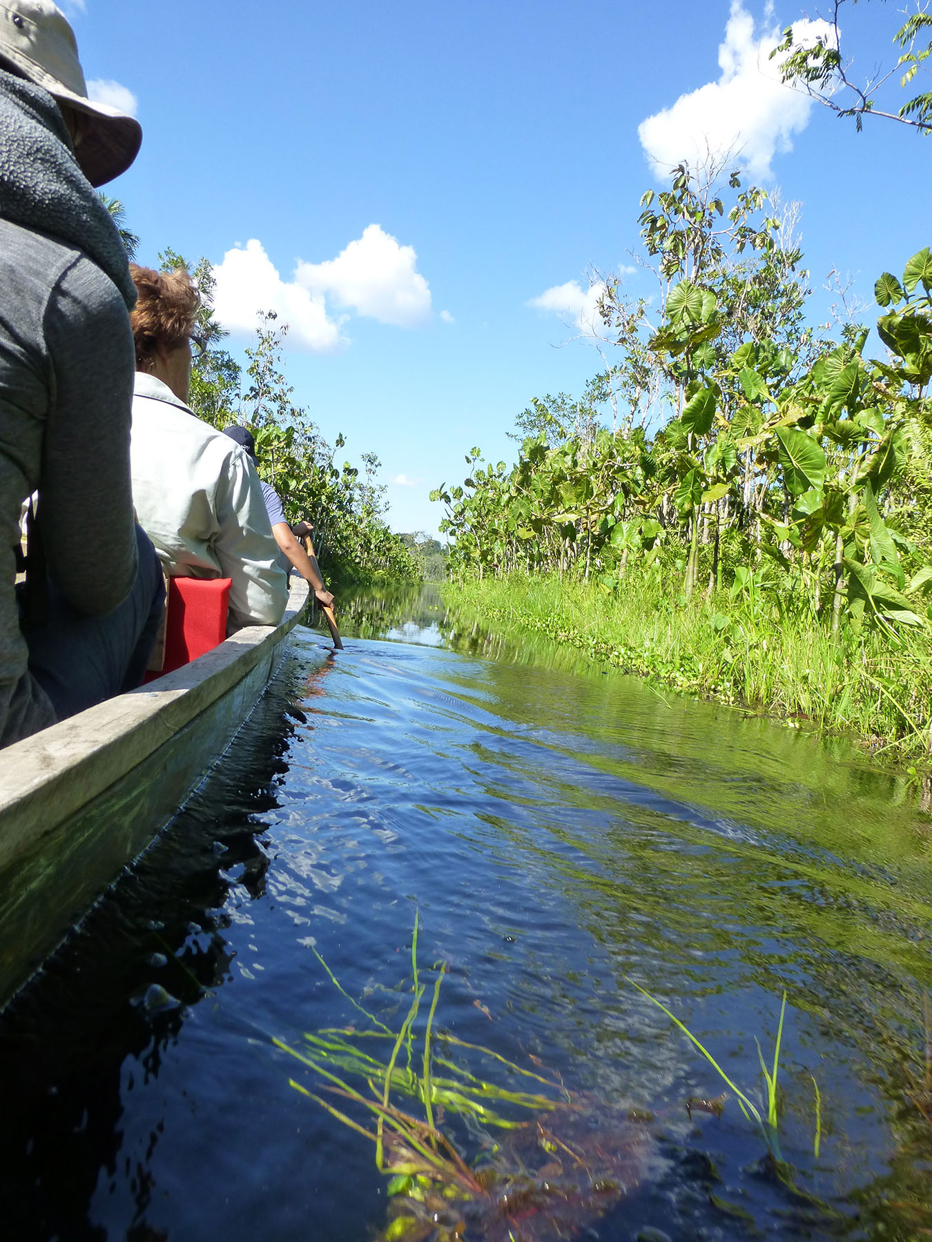 Lagoon To The Lake Pilchicocha