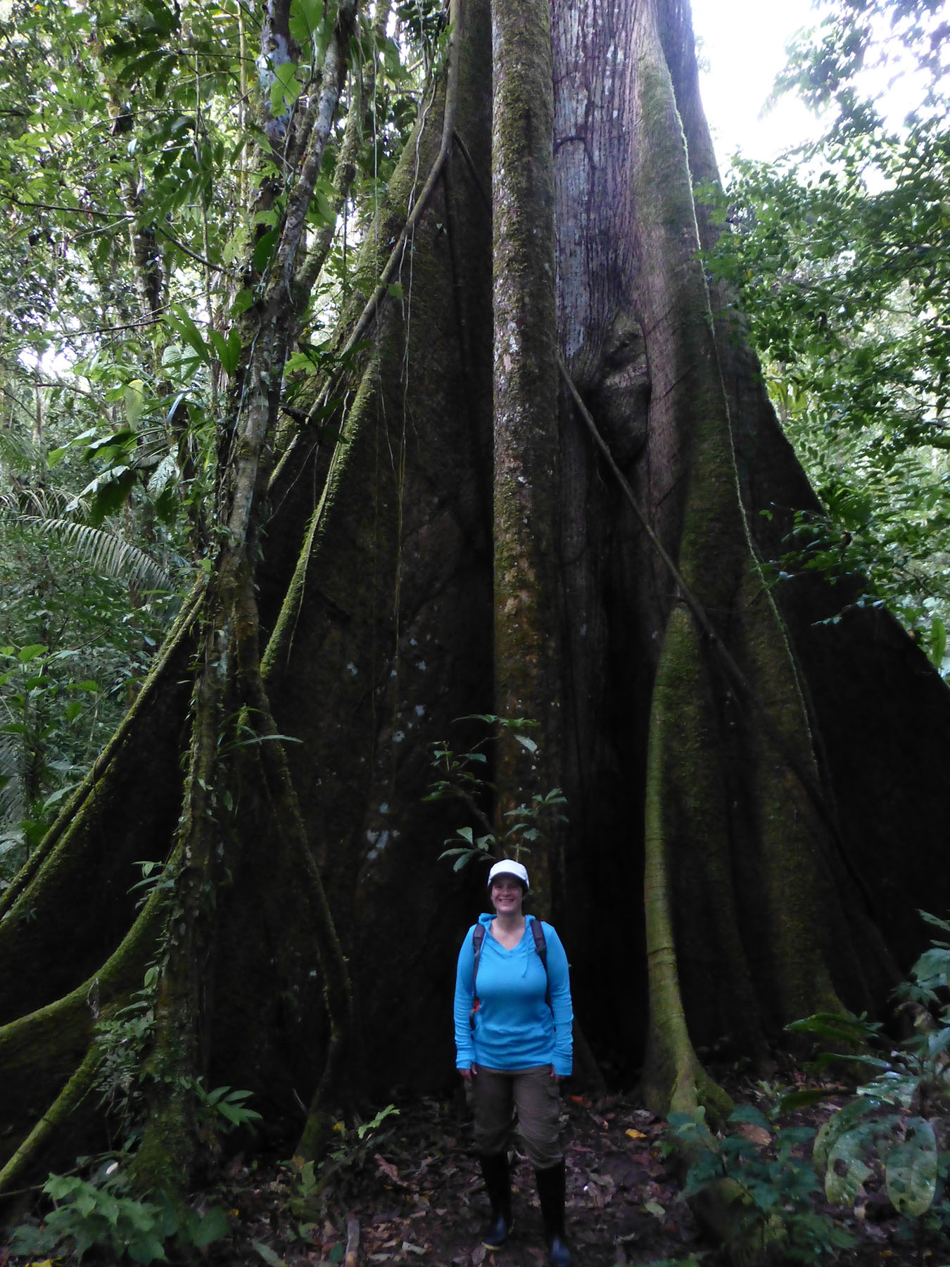 Katie in front of a Kapok Tree. Notice the giant buttress roots pushing out to the sides.
