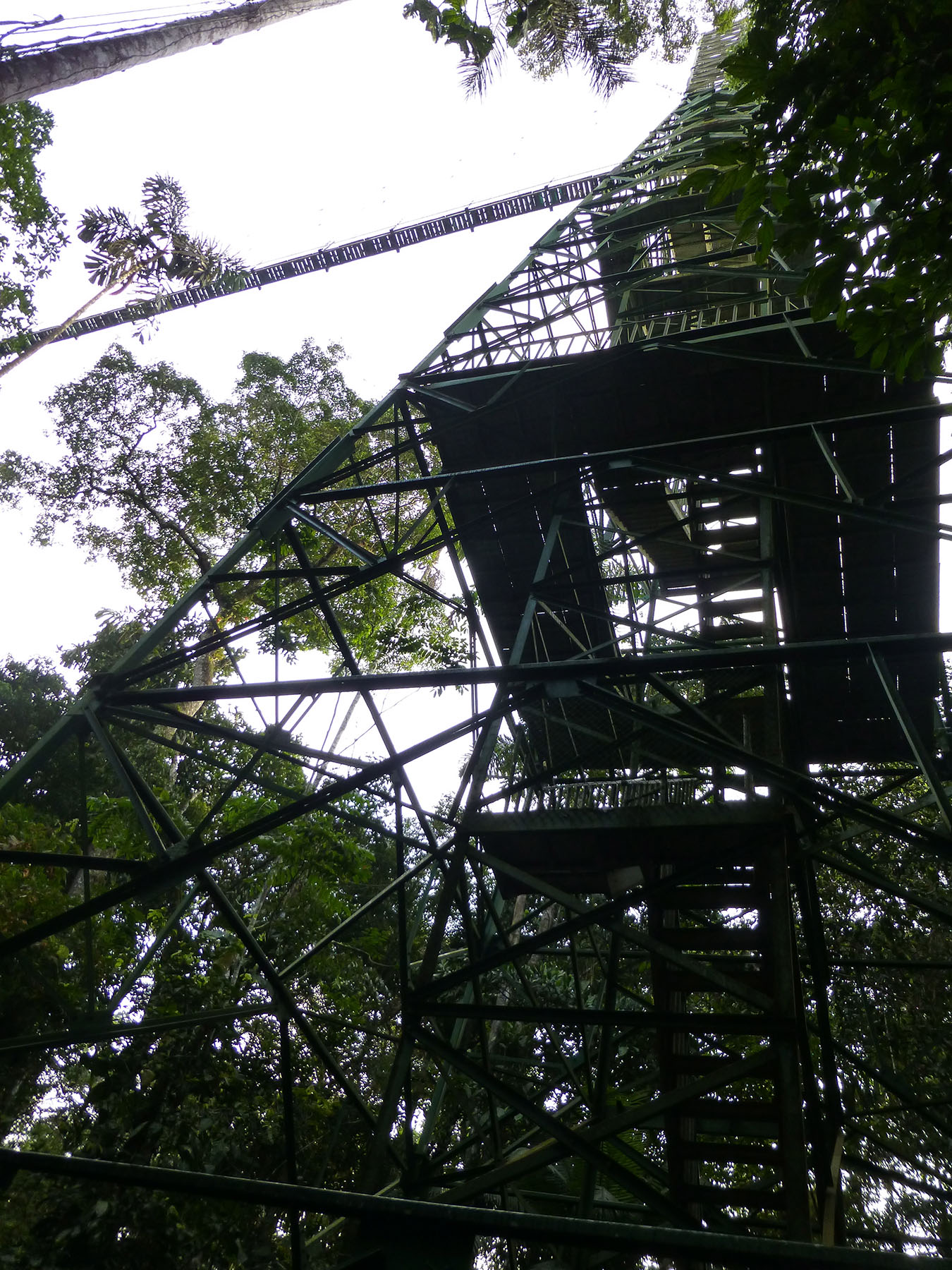 Tower To The Canopy Walkway