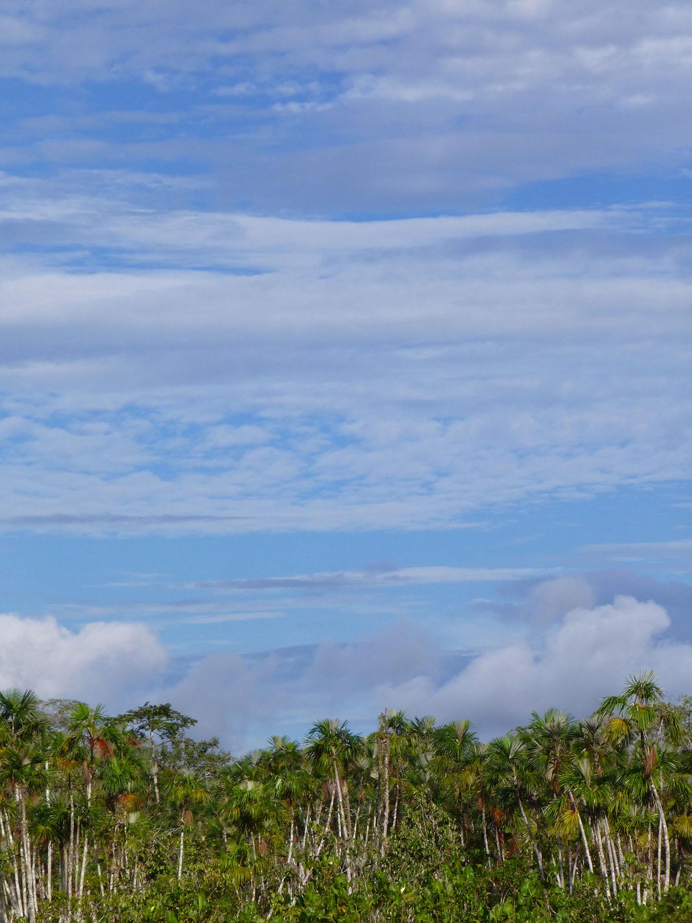 Amazonian Sky