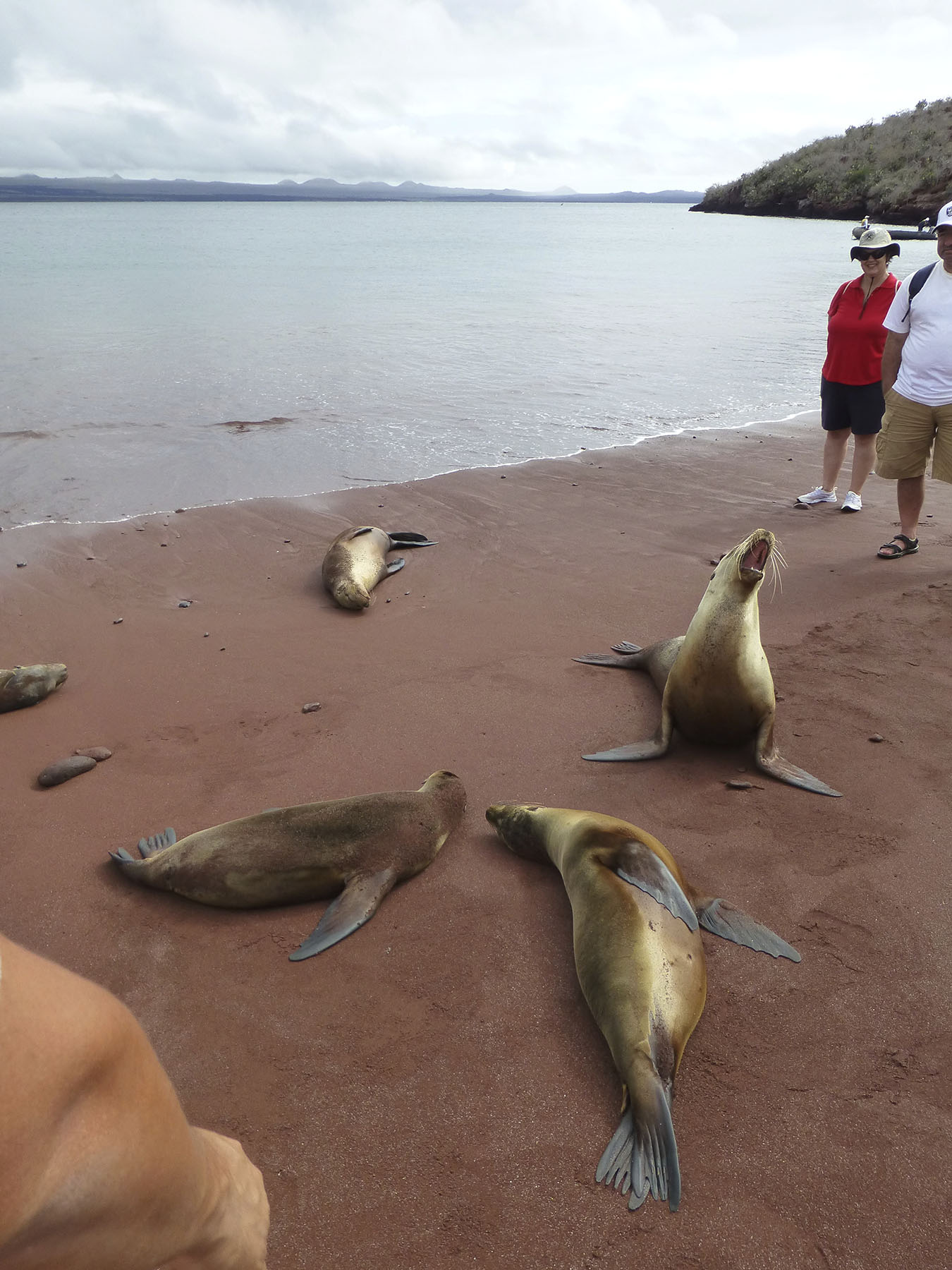 The sea lions at Rabida island have got a lot of spunk...after nap time.