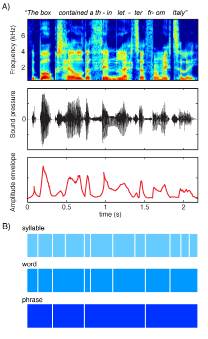 Various representations of a spoken sentence, highlighting the rhythmic information contained in the amplitude envelope (top) and various levels of linguistic information conveyed (bottom). (From  Peelle & Davis, 2012,  Frontiers in Psychology    )