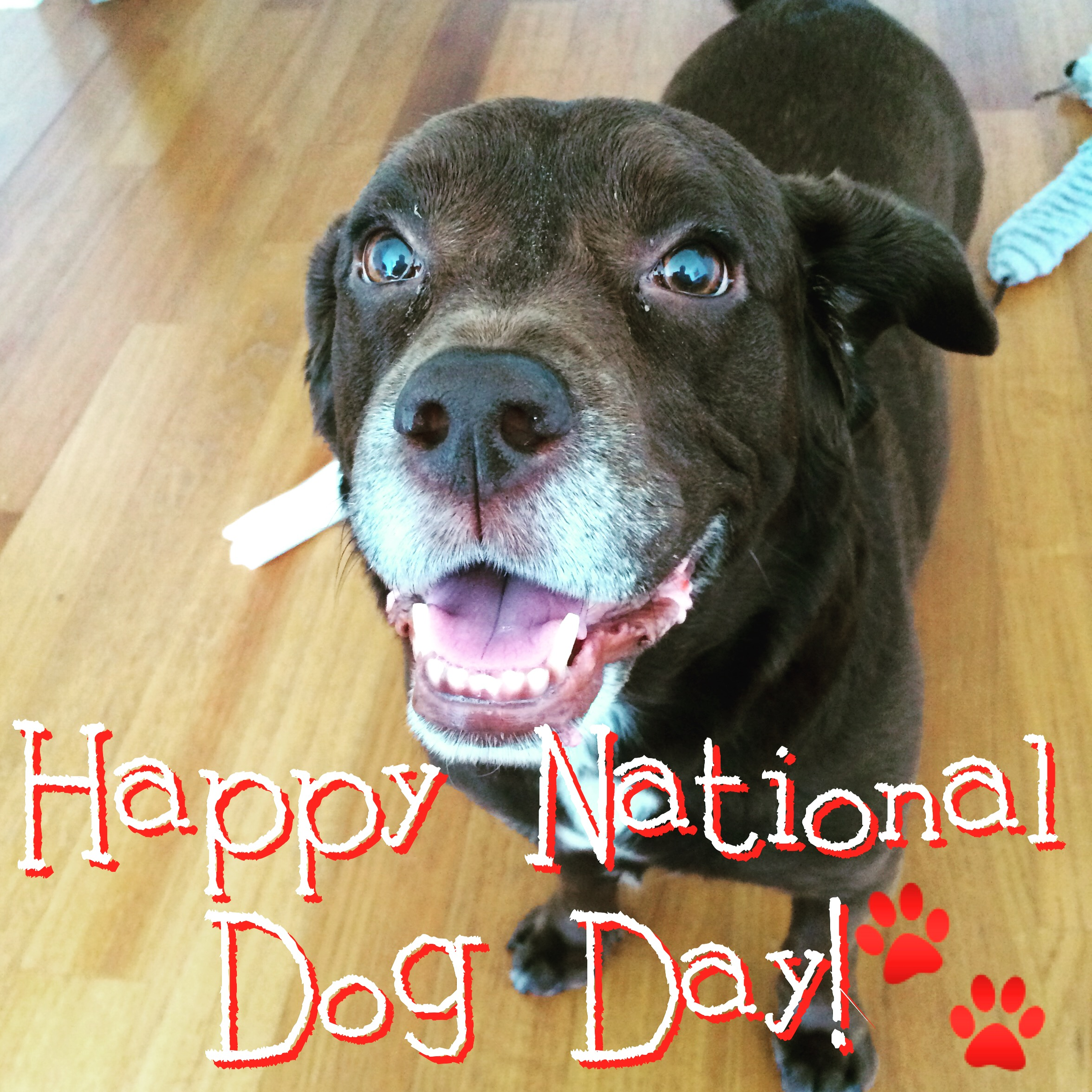 Ripley says Happy National Dog Day!