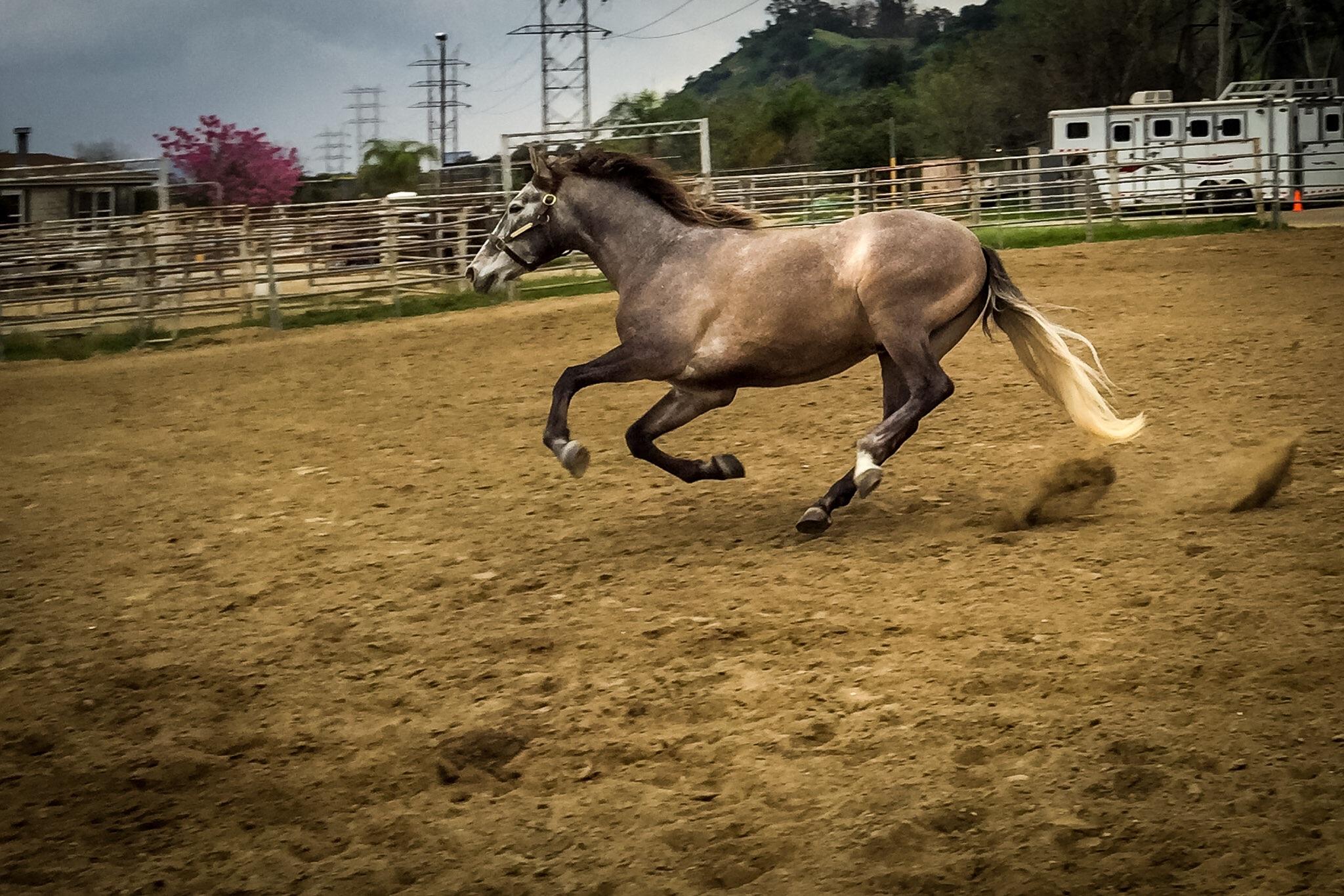 Romeo taking a run