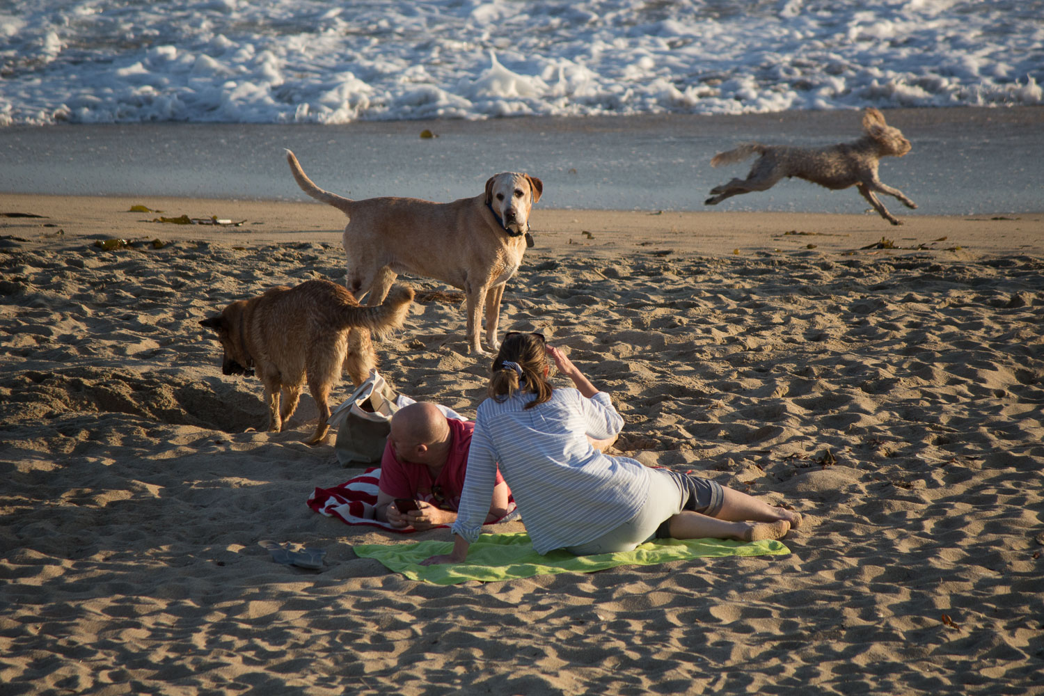This photo taken June 18, 2016 at the Huntington Beach Dog Beach. Included in the   Surf City, U.S.A.  project on this website.