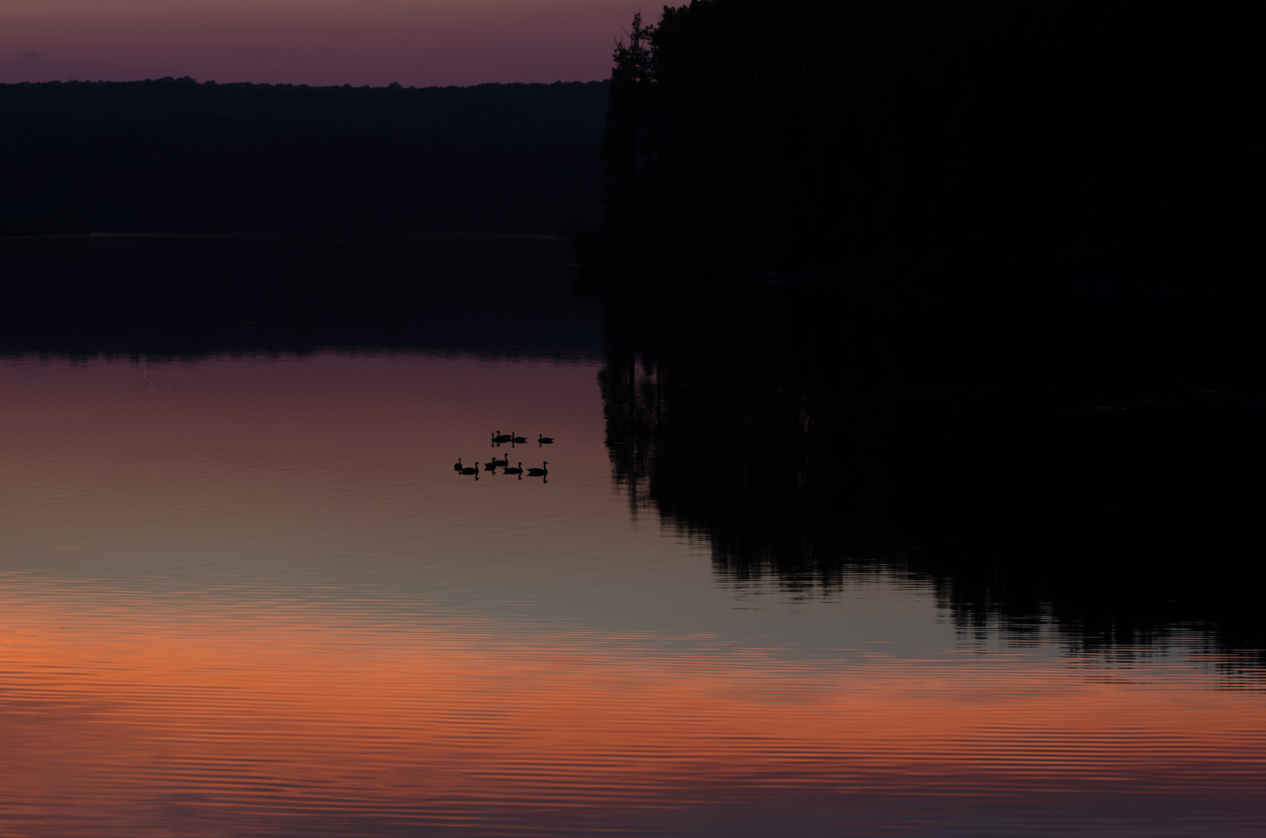 Silhouetted ducks at sunset