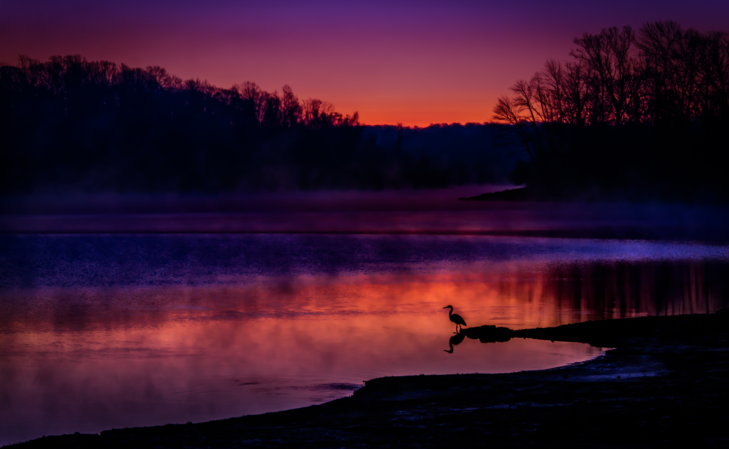 Morning Heron at Sunrise