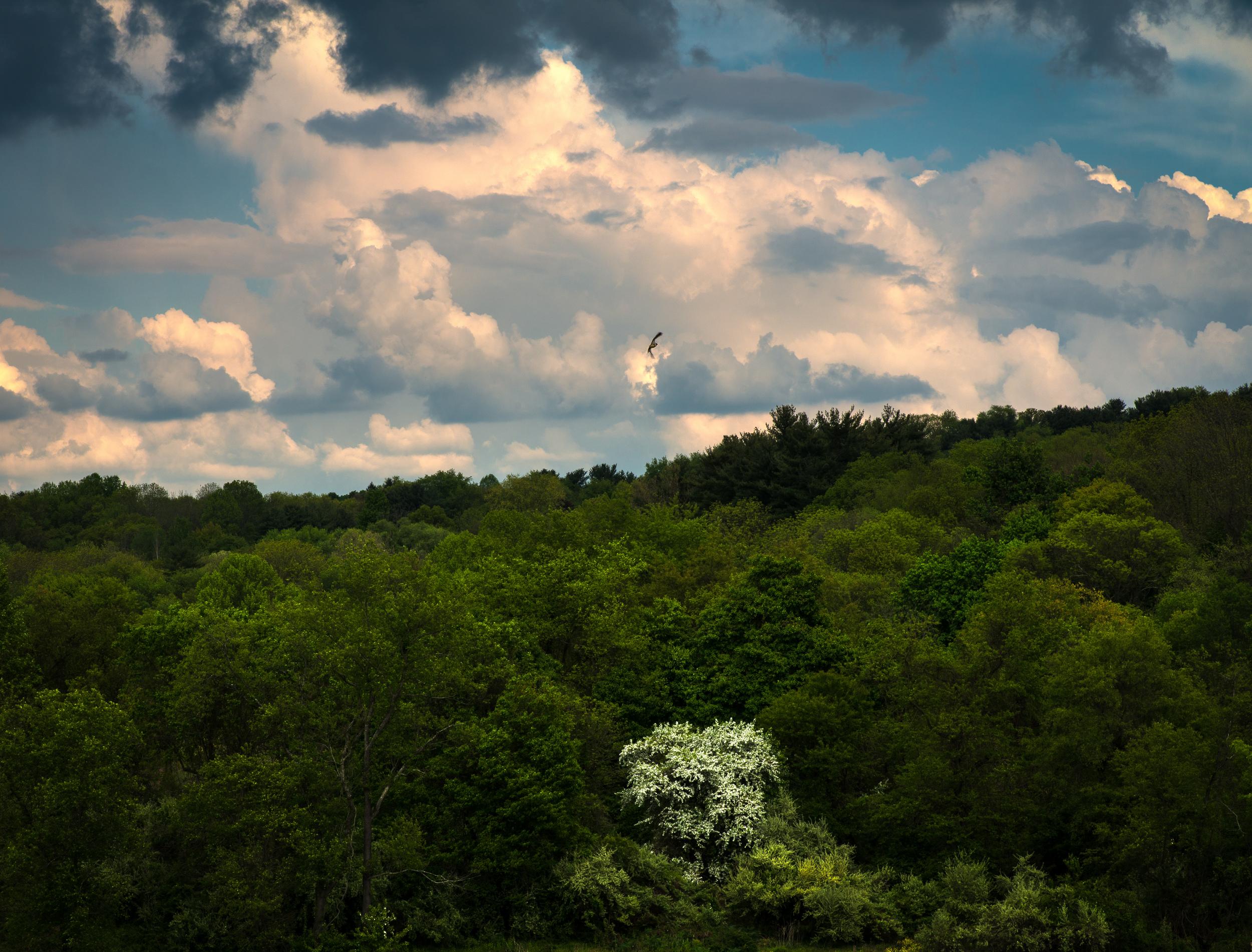 Cloudy skies (1 of 1).jpg