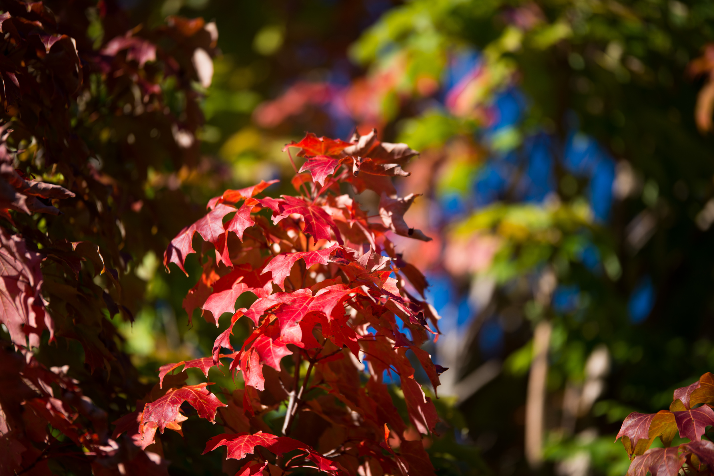 Autumn arrives (1 of 1).jpg