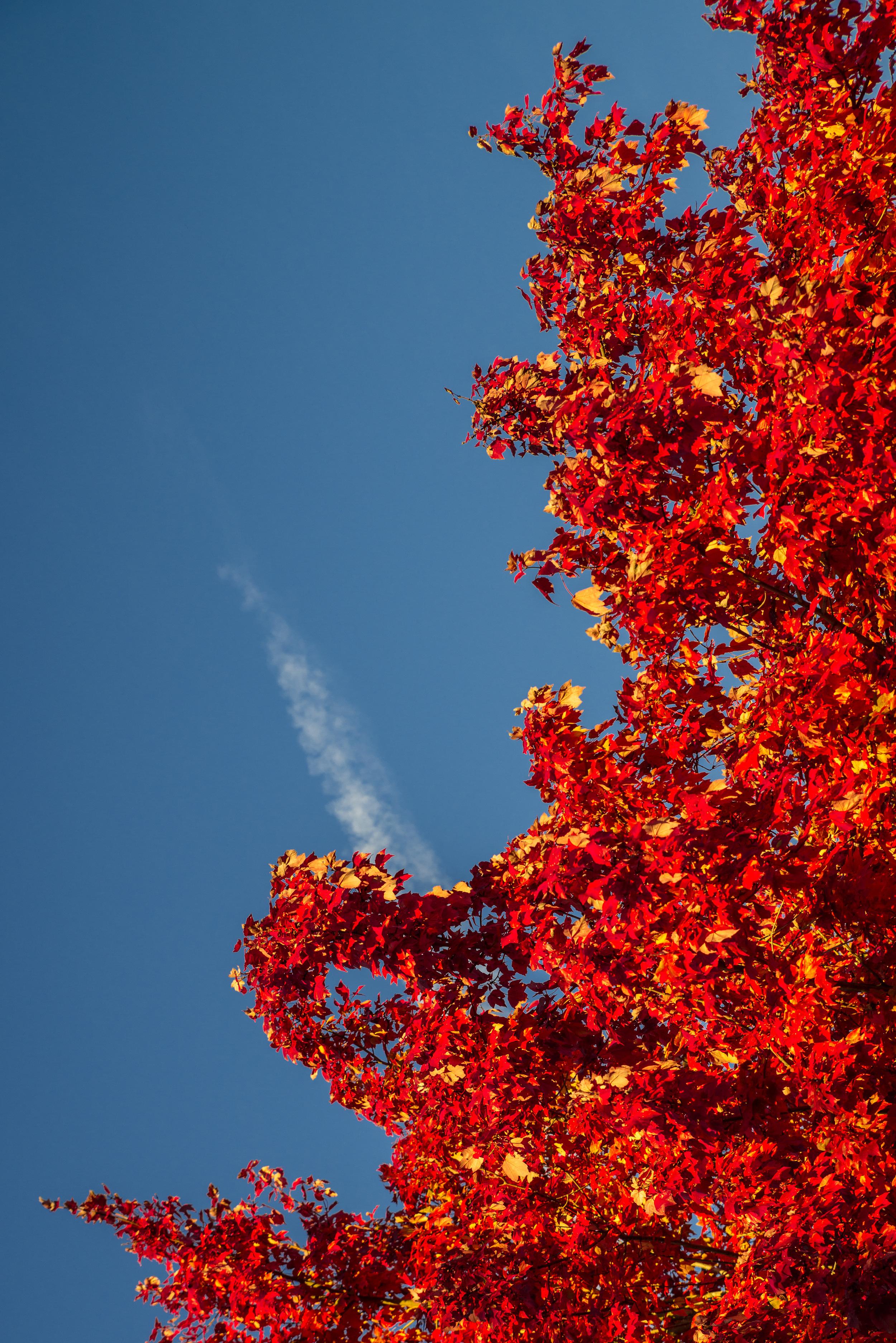Autumn Fire (1 of 1).jpg