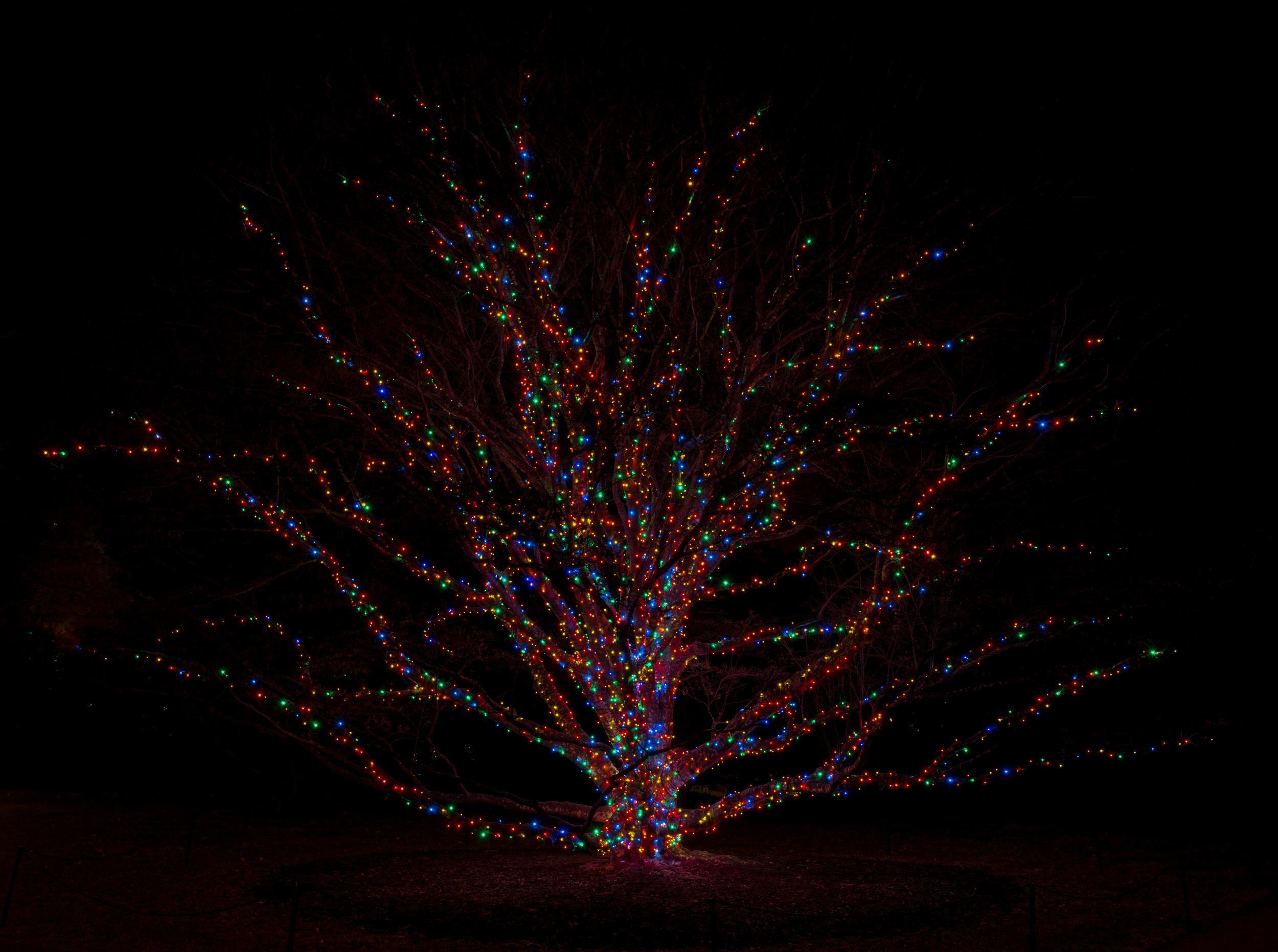 Longwood New Years 1 (1 of 1).jpg