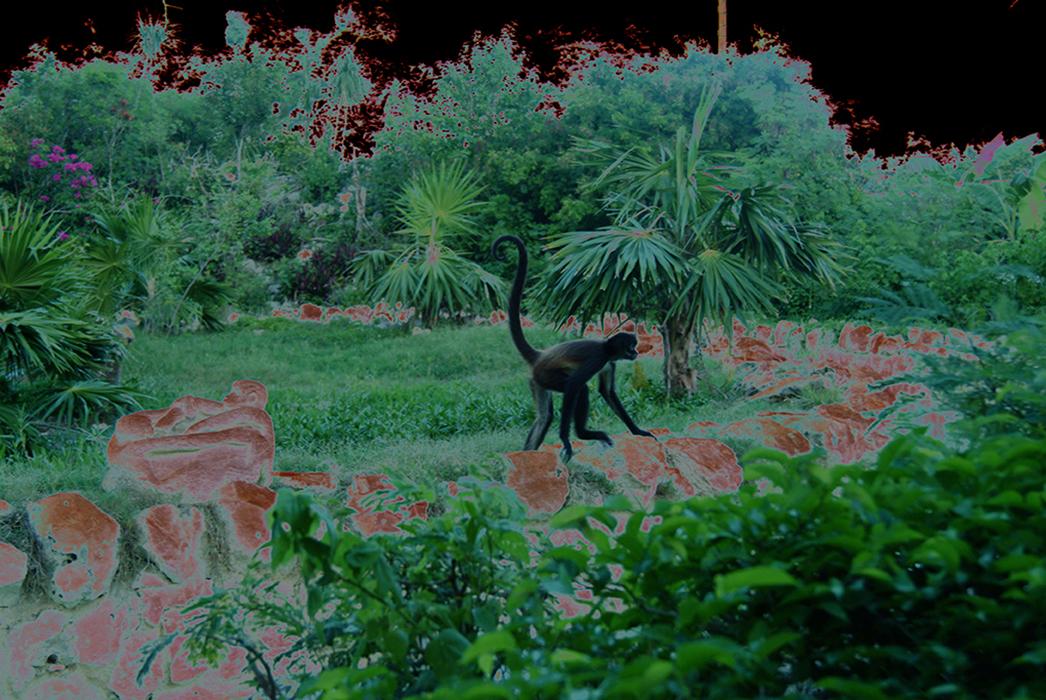 """Monkey_1"" Archival pigment print on metallic paper. by Rafael Fuchs 2016"