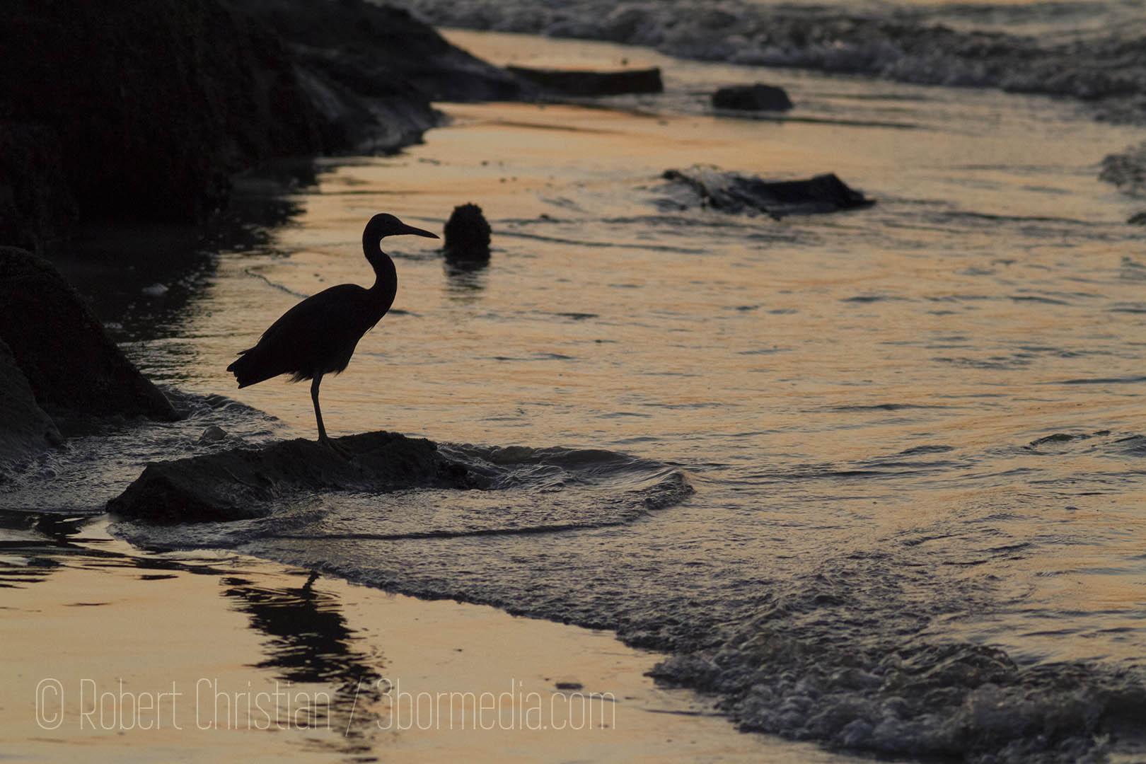 Silhouette on the shore KK.