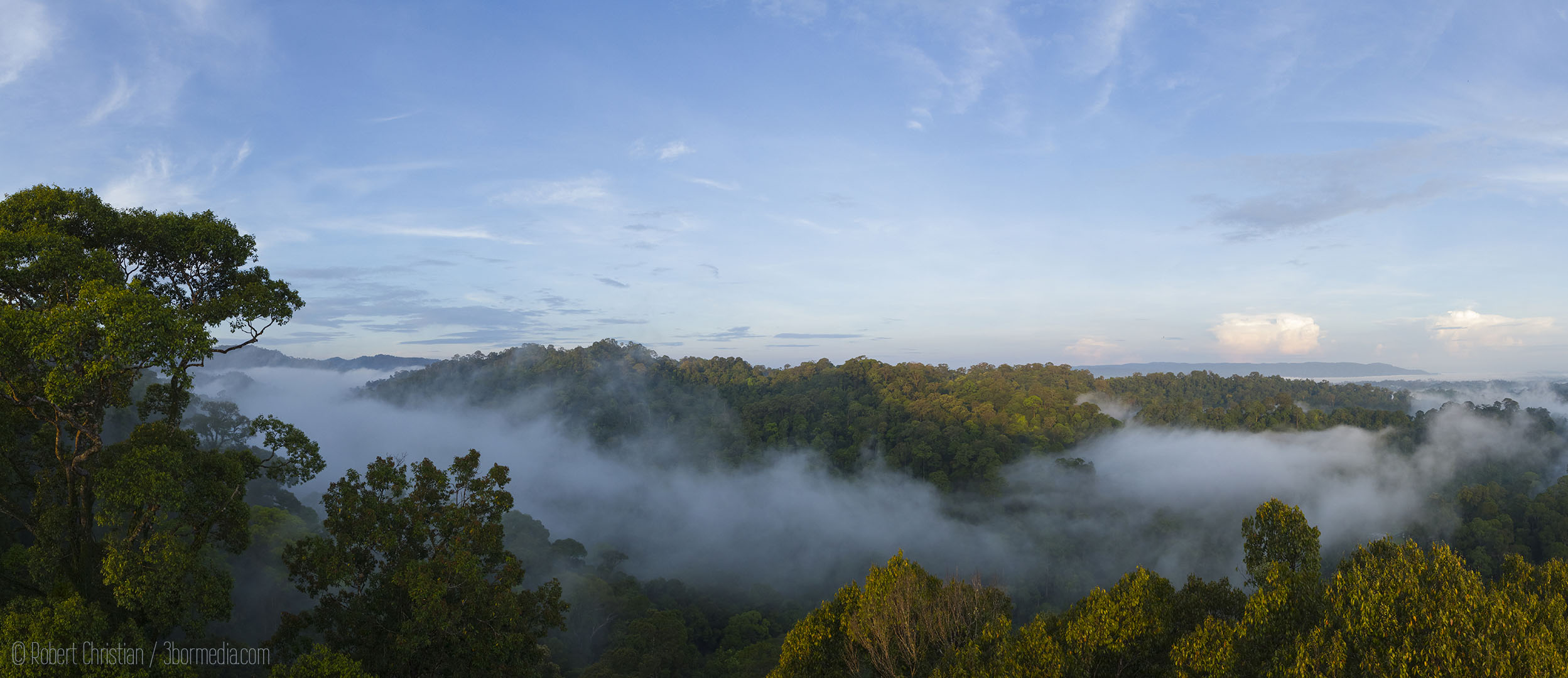 Canopy View Ulu Temburong