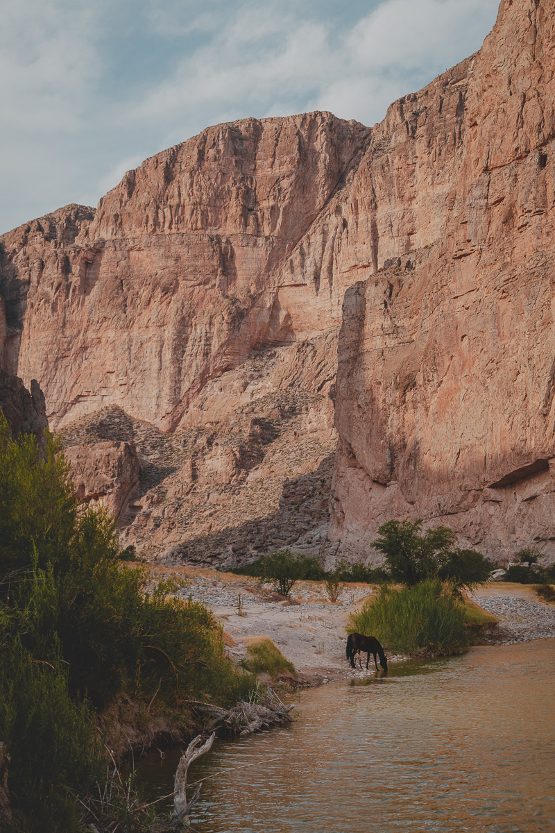 wild horse drinking from river running through steep canyon on border of mexico and united states