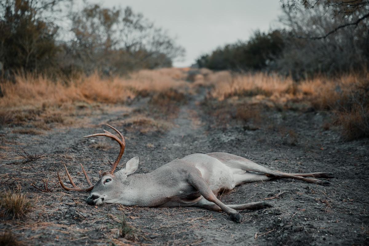 dead deer laying in dirt road