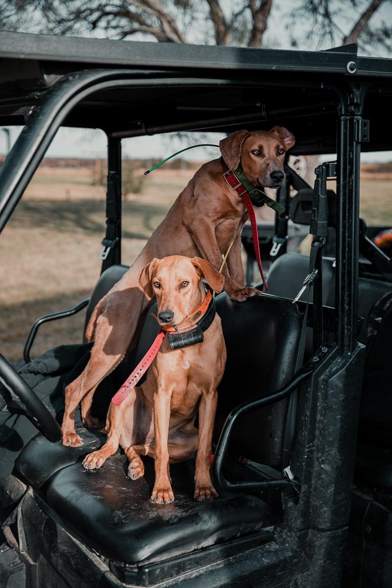 hunting dogs with radio collars on atv