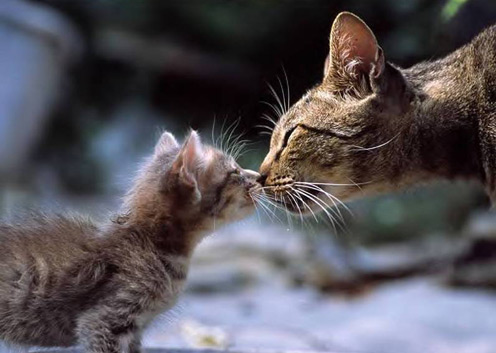 cats-nose-1.jpg