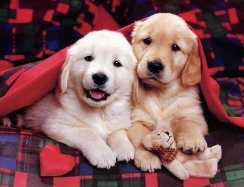 CuteDogs01.jpg