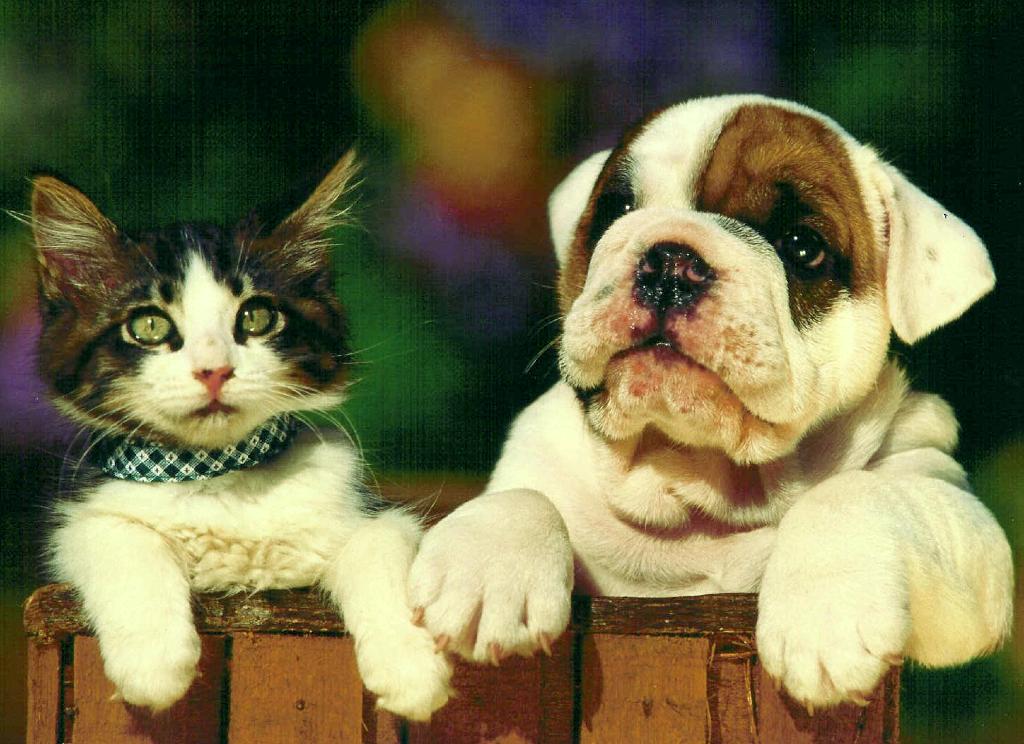 Cat&Dog fence.jpg