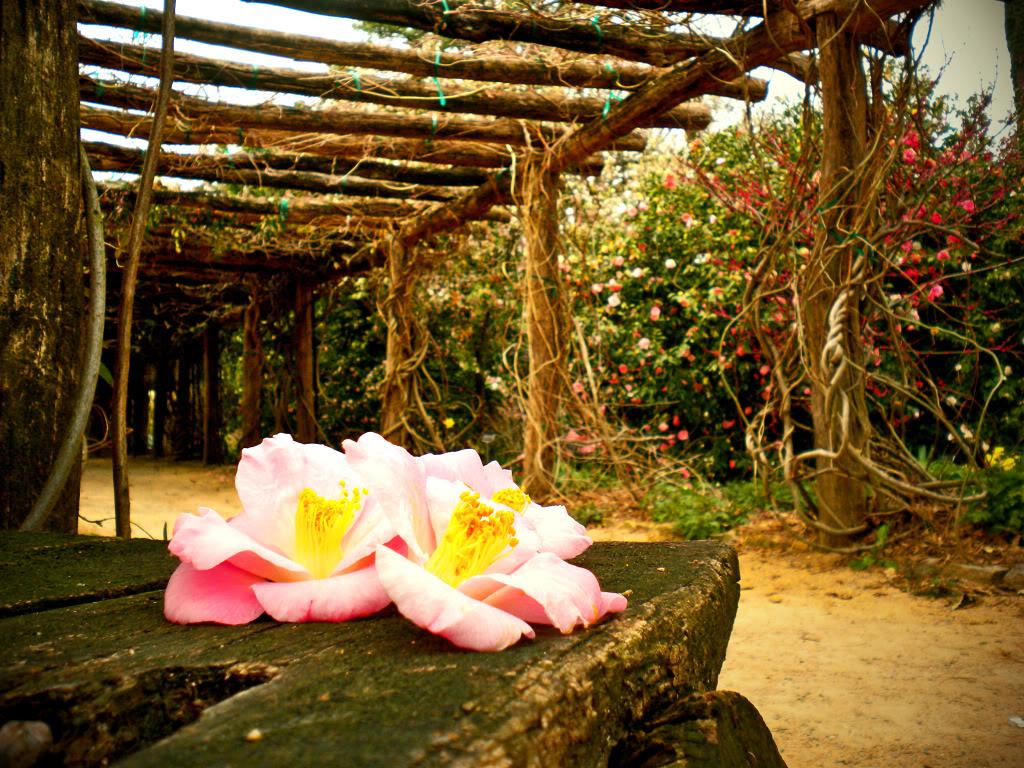 Photo courtesy of the North Carolina Botanical Garden.