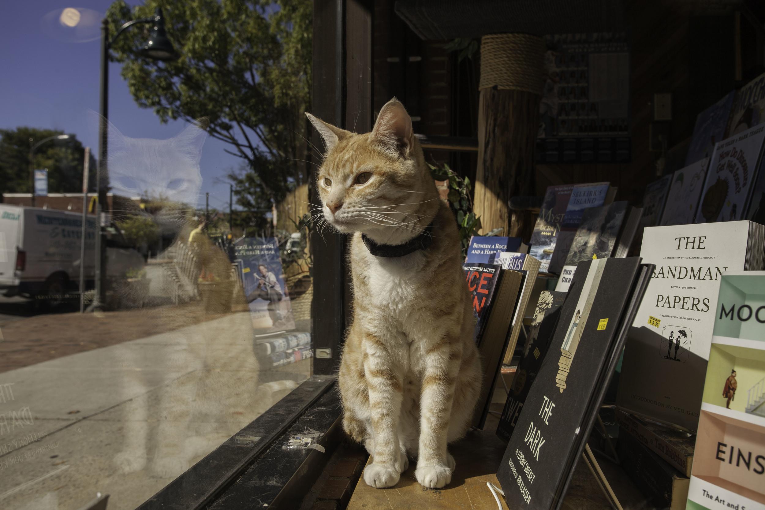 Bookstore_05_IMG_4183.jpg
