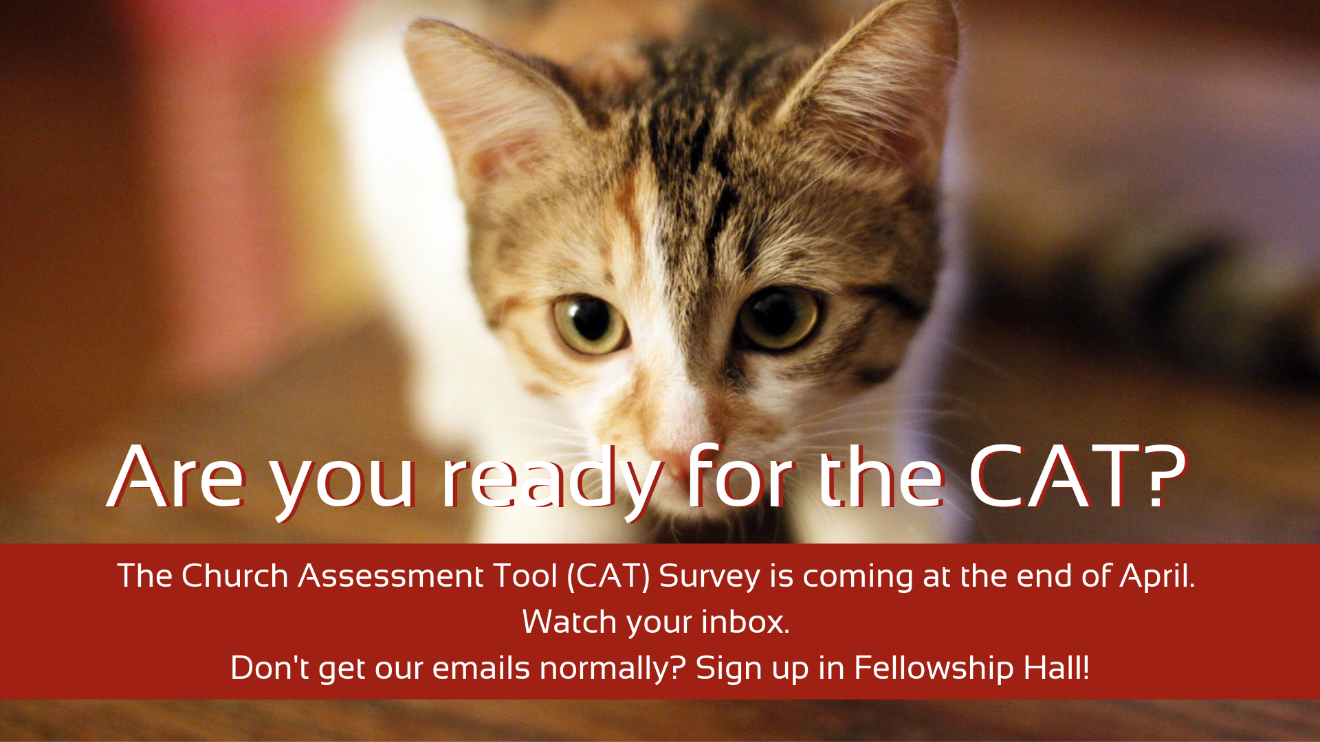 We'll be doing a survey coming up called the Church Assessment Tool or CAT for short. If you're receiving this email, you'll receive a link to complete the survey on/after April 28th.  Please watch your inbox & take the time necessary to complete the survey. You'll help our church discern the next steps for our future (we're using this tool as a precursor for one of our fall series about visioning).