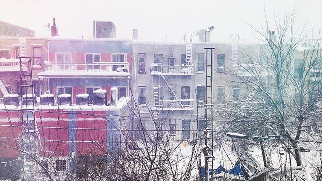 Winter Colors, Bushwick.