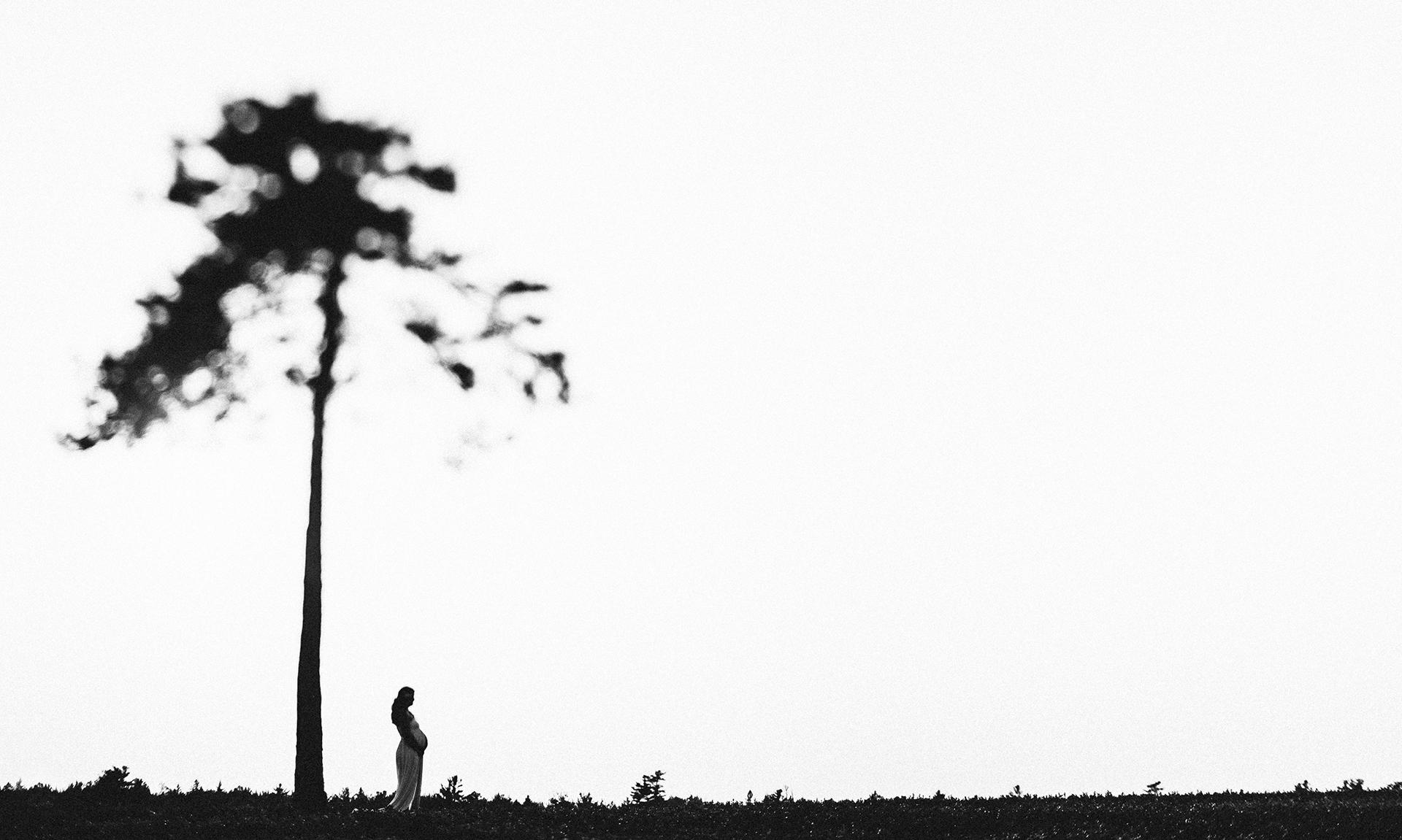 sandi-luke-maine-tree-2.jpg