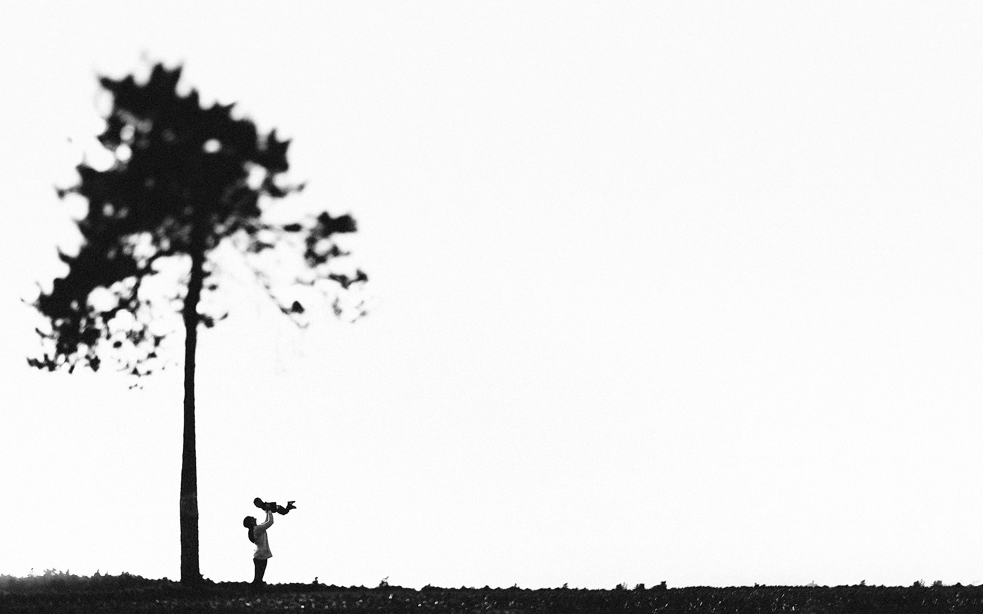 sandi-luke-maine-tree-1.jpg
