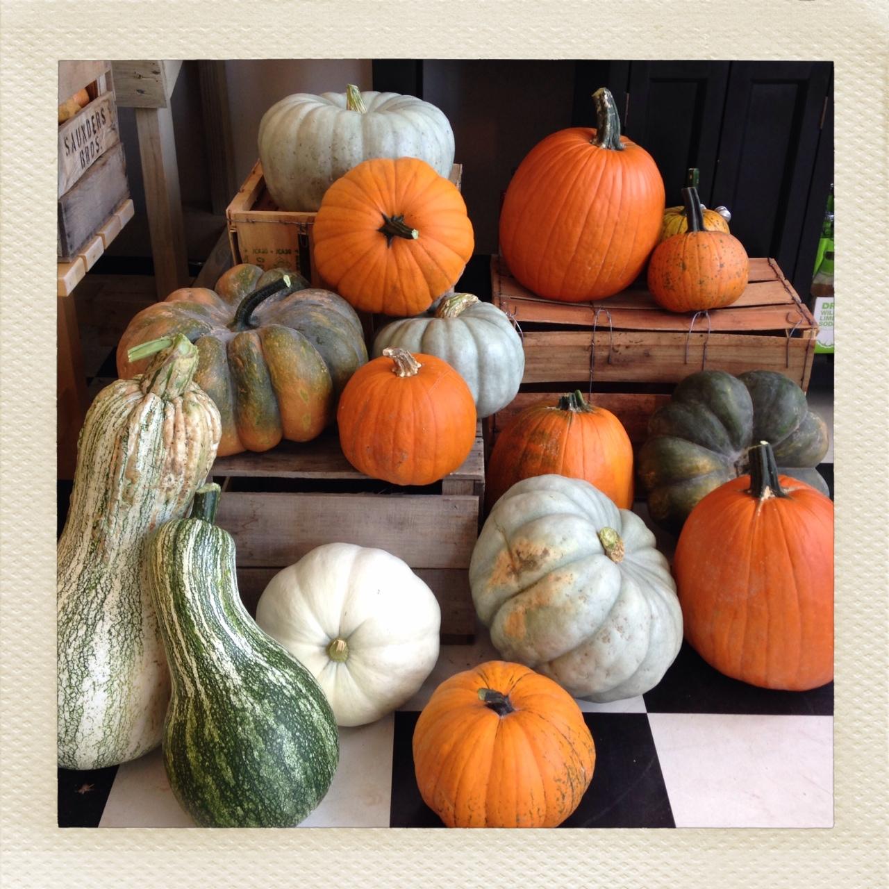 pumpkinstill.JPG