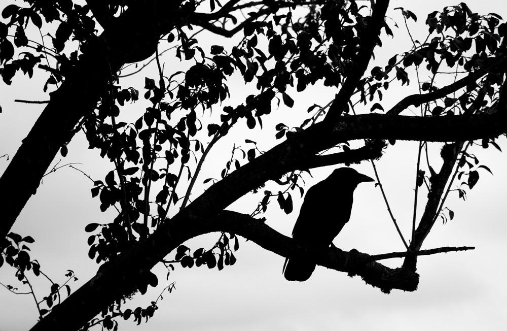 BlackSilhouette.jpg