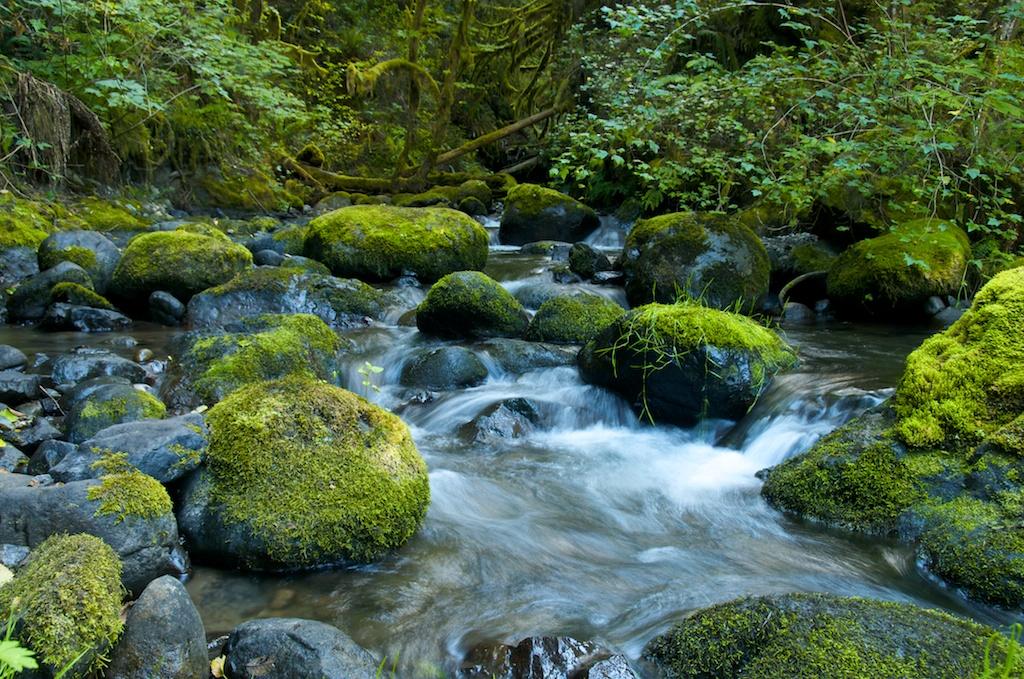 Mossy Creek.jpg