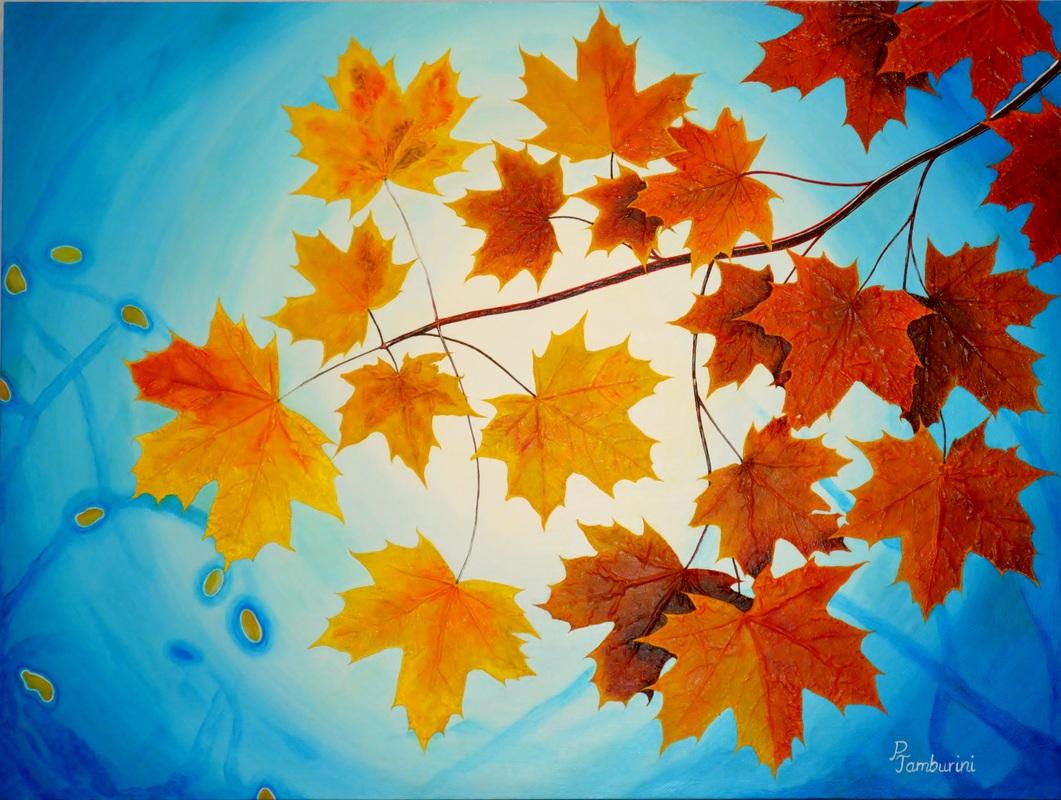 Maple Leaves againts Skylight.jpg