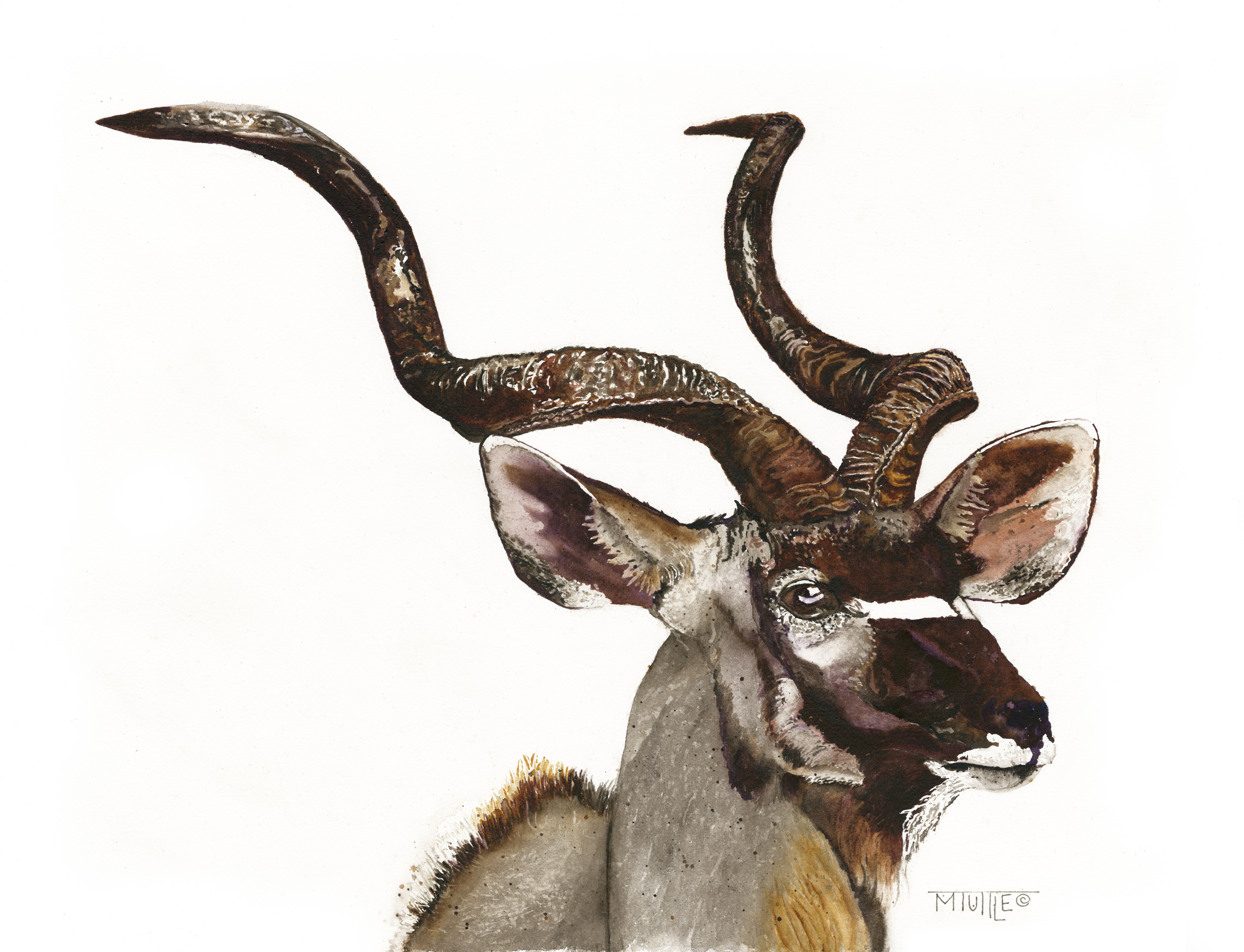 Kudu the Great.jpg