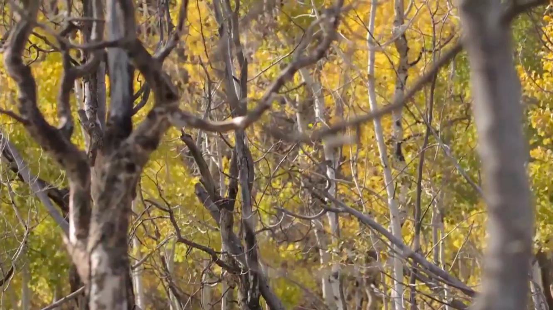 Screen shot 2014-11-28 at 7.15.44 PM.png
