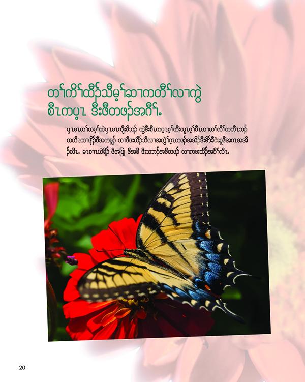 TT_butterfly.jpg