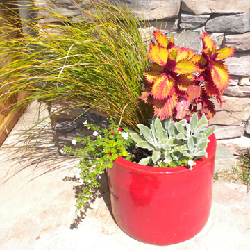 Container Pots