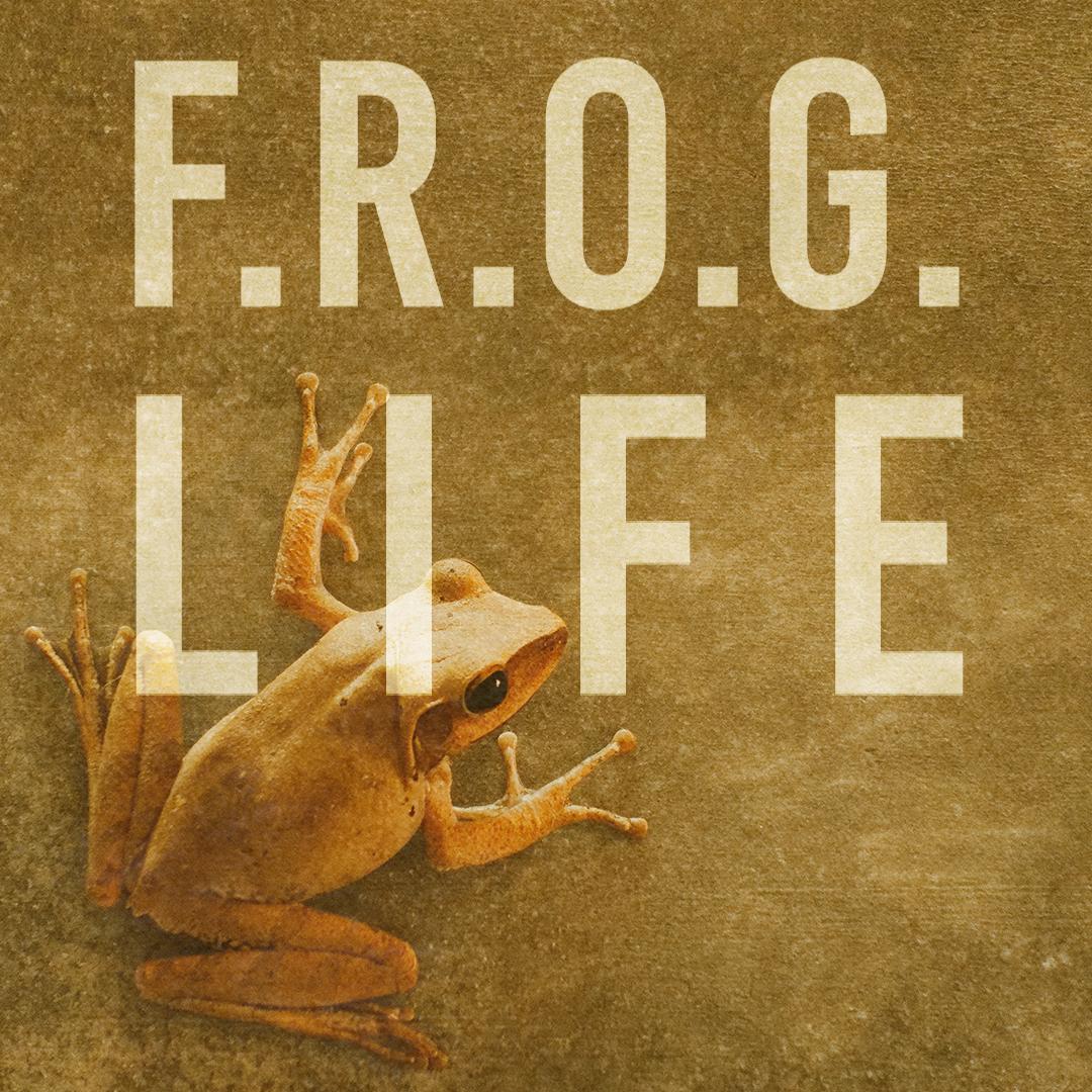froglifesquare.jpg